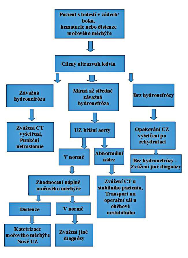 Algoritmus pro ultrazvukové vyšetření u pacienta s bolestmi v zádech/boku, hematurií nebo retencí moče