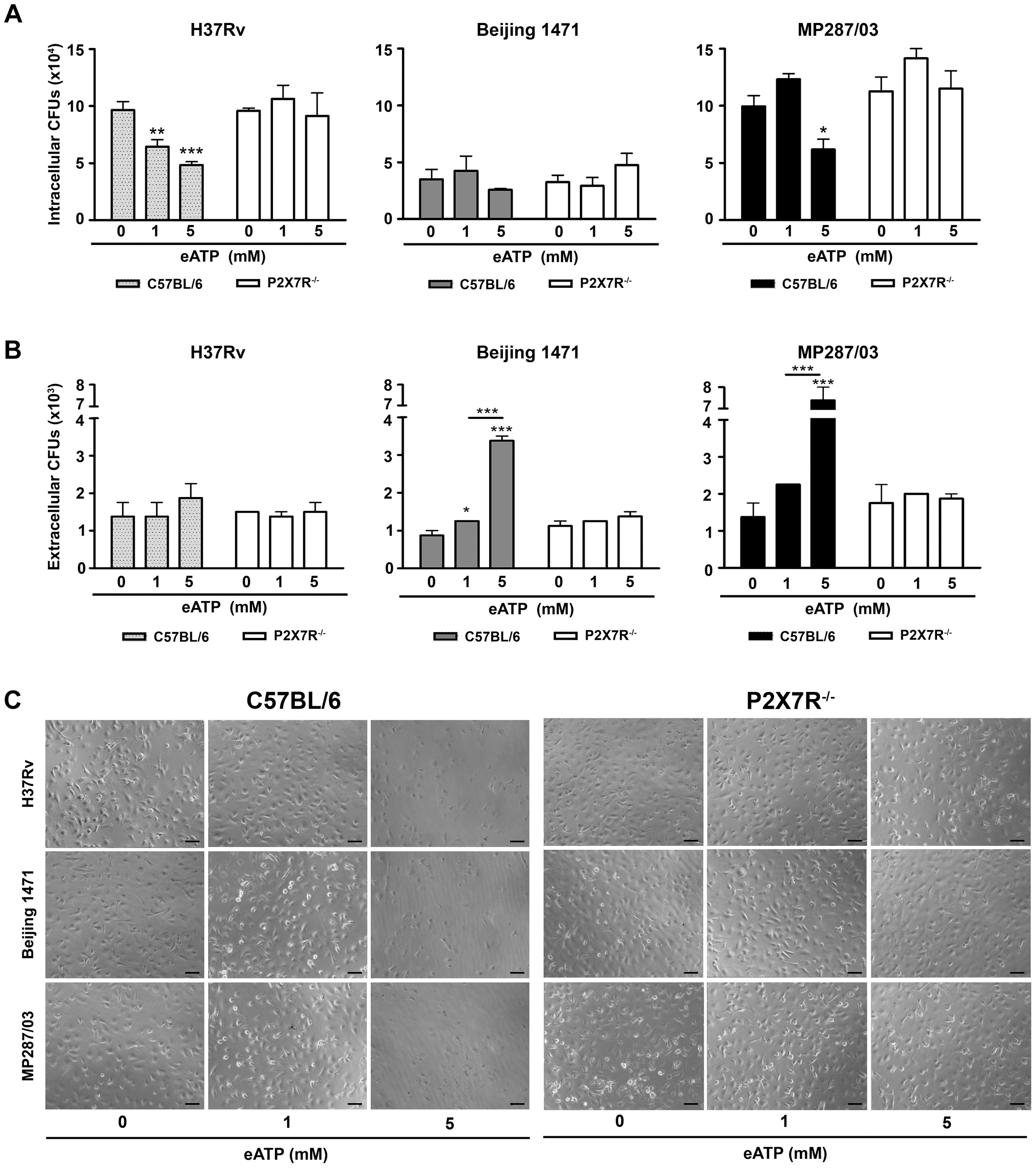 Effects of eATP on mycobacterial killing or release by C57BL/6 and P2X7R<sup>−/−</sup> BMDMs.