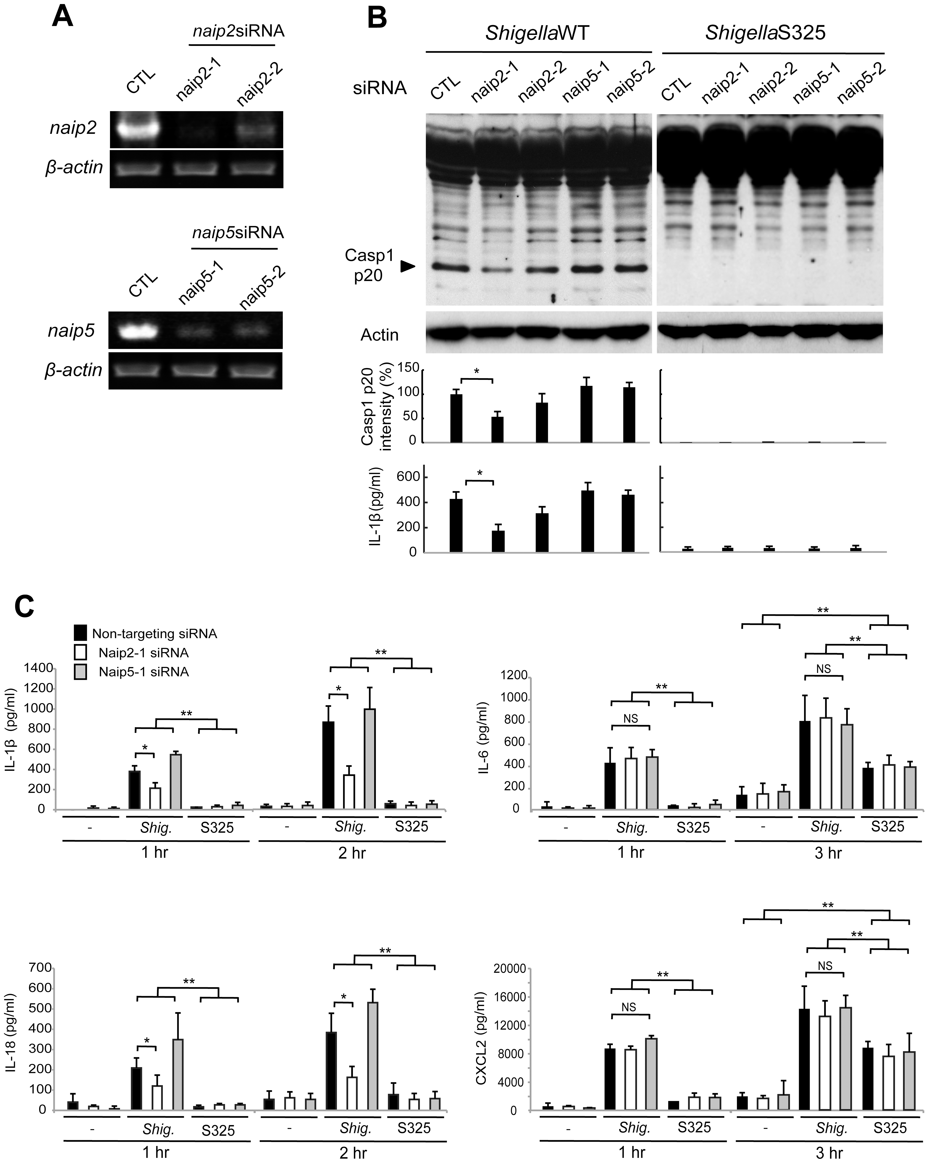 <i>Shigella</i> induces caspase-1 activation via Nlrc4, Asc and Naip2 in macrophages.