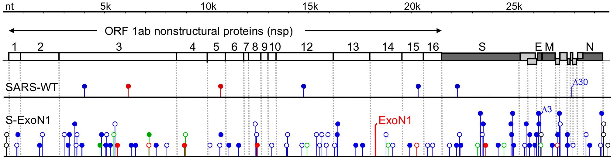 Distribution of mutations across genomes of aggregate viral clones.
