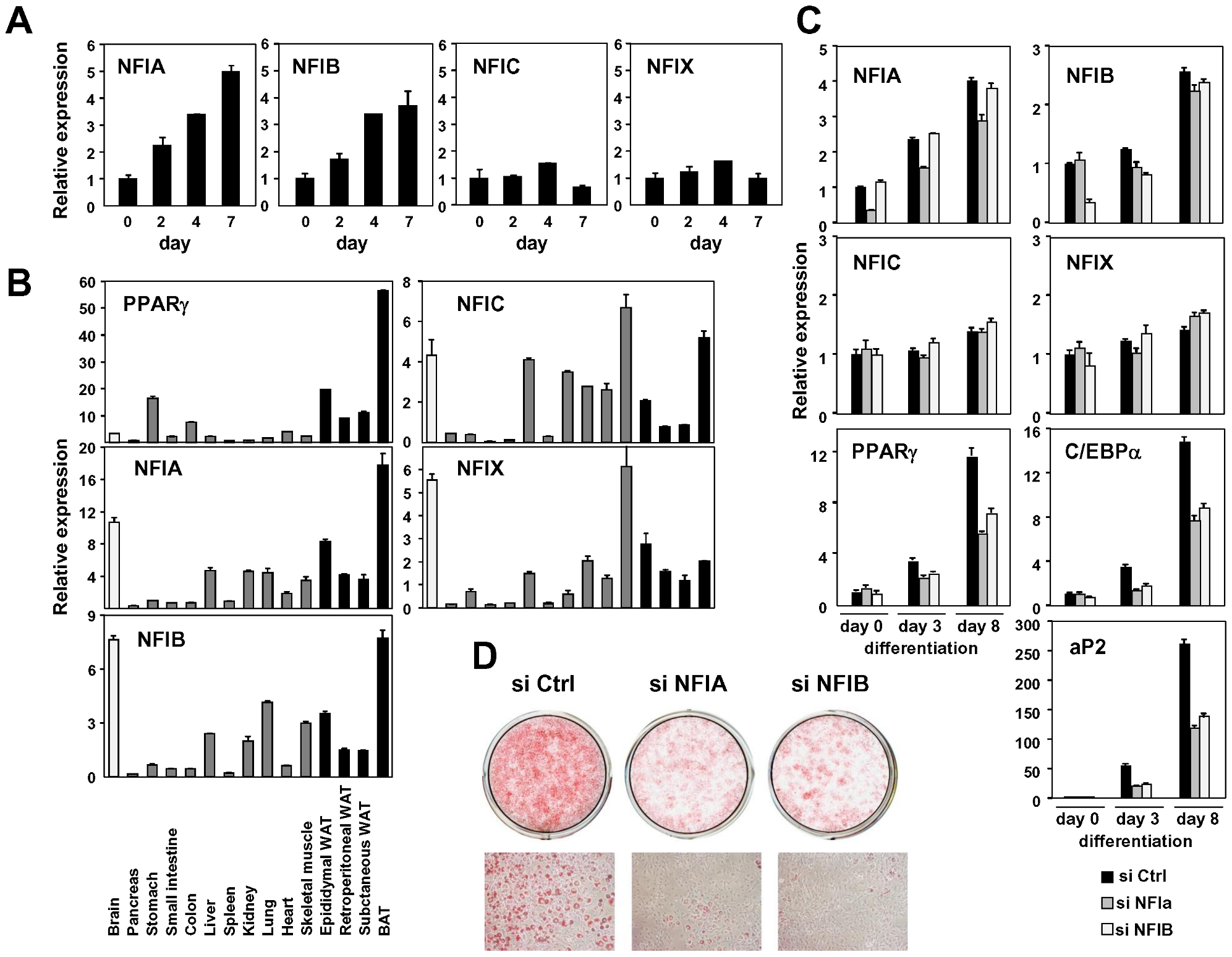 NFIA and NFIB are novel regulators of adipocyte differentiation.