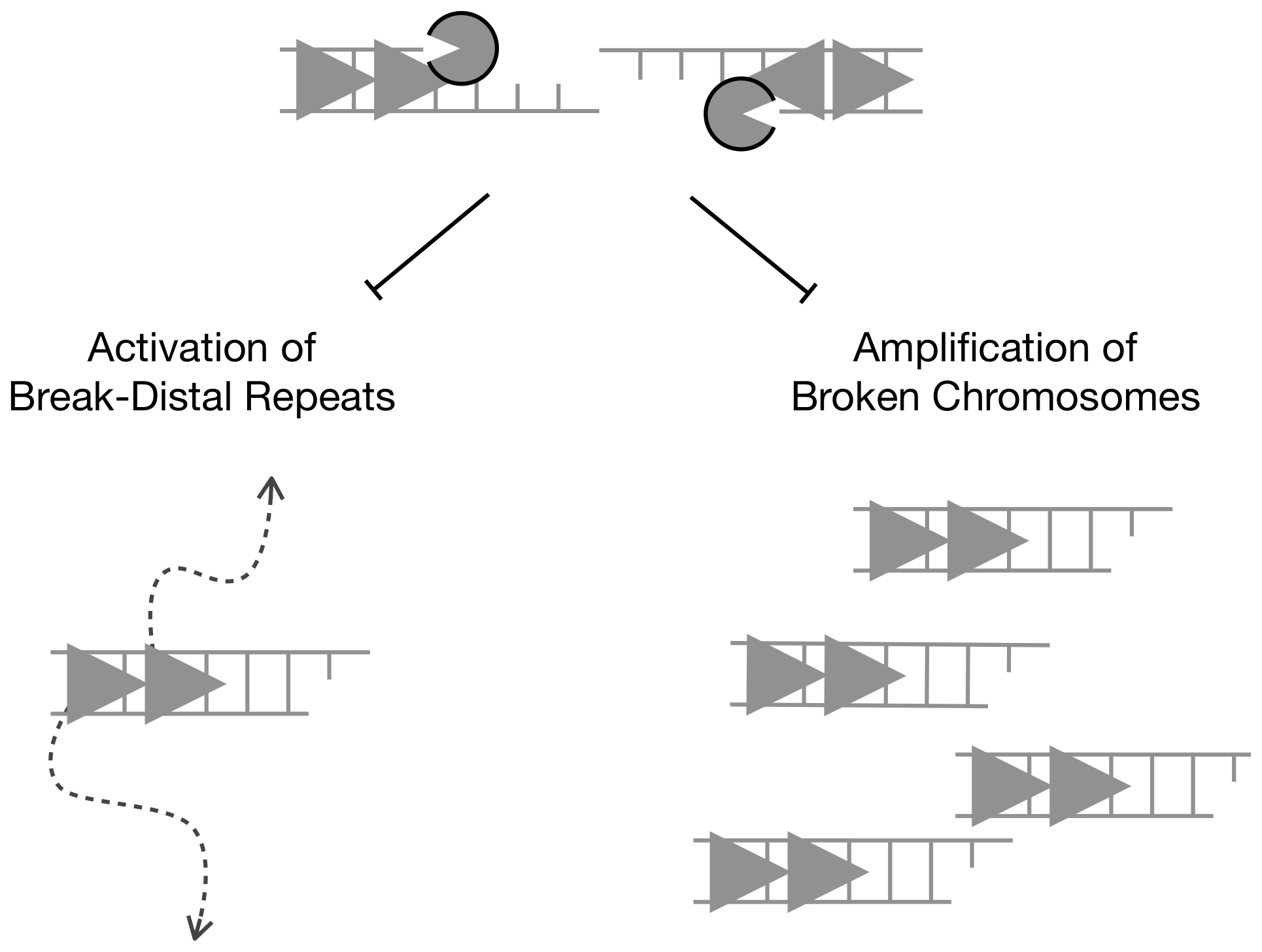 Long-range DNA resection at chromosome breaks promotes genome stability by constraining non-allelic homologous recombination between natural repeats.