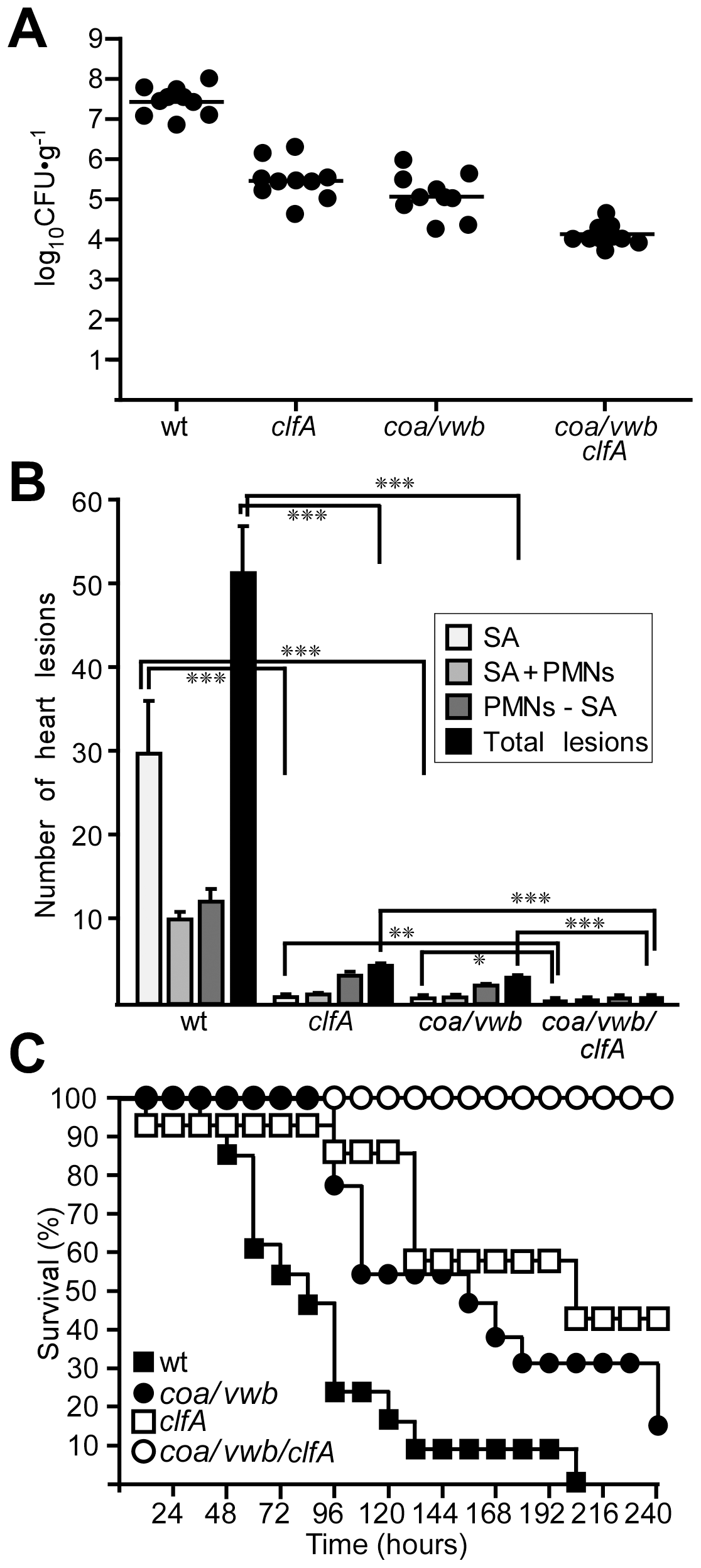 Staphylococcal agglutination in heart tissues is required for the pathogenesis of sepsis.