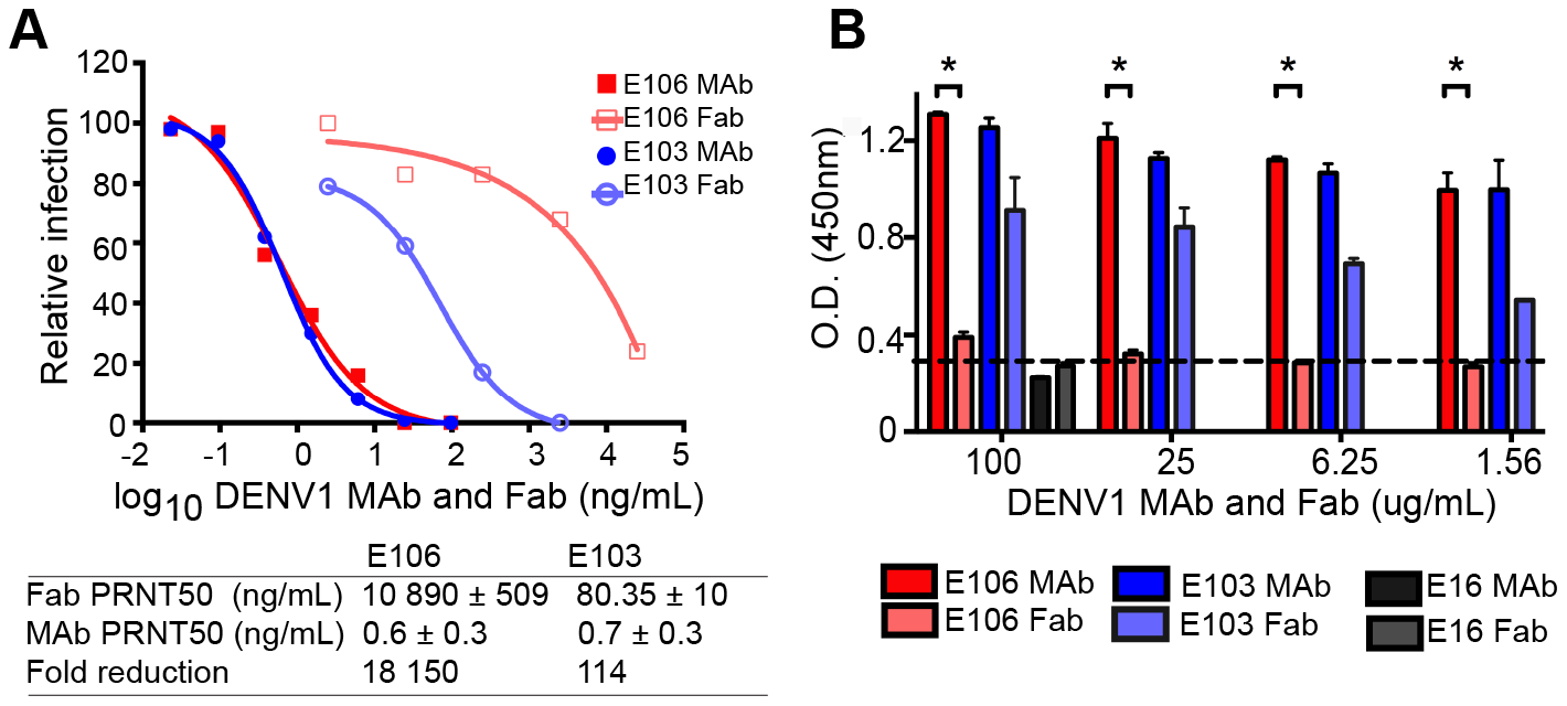 Fab versus MAb neutralization and binding.