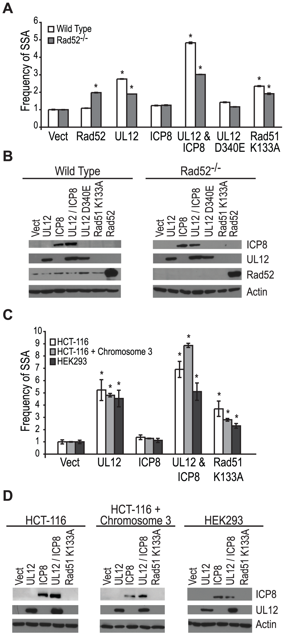 Rad52 and/or ICP8 are necessary for the UL12-mediated increase in SSA.