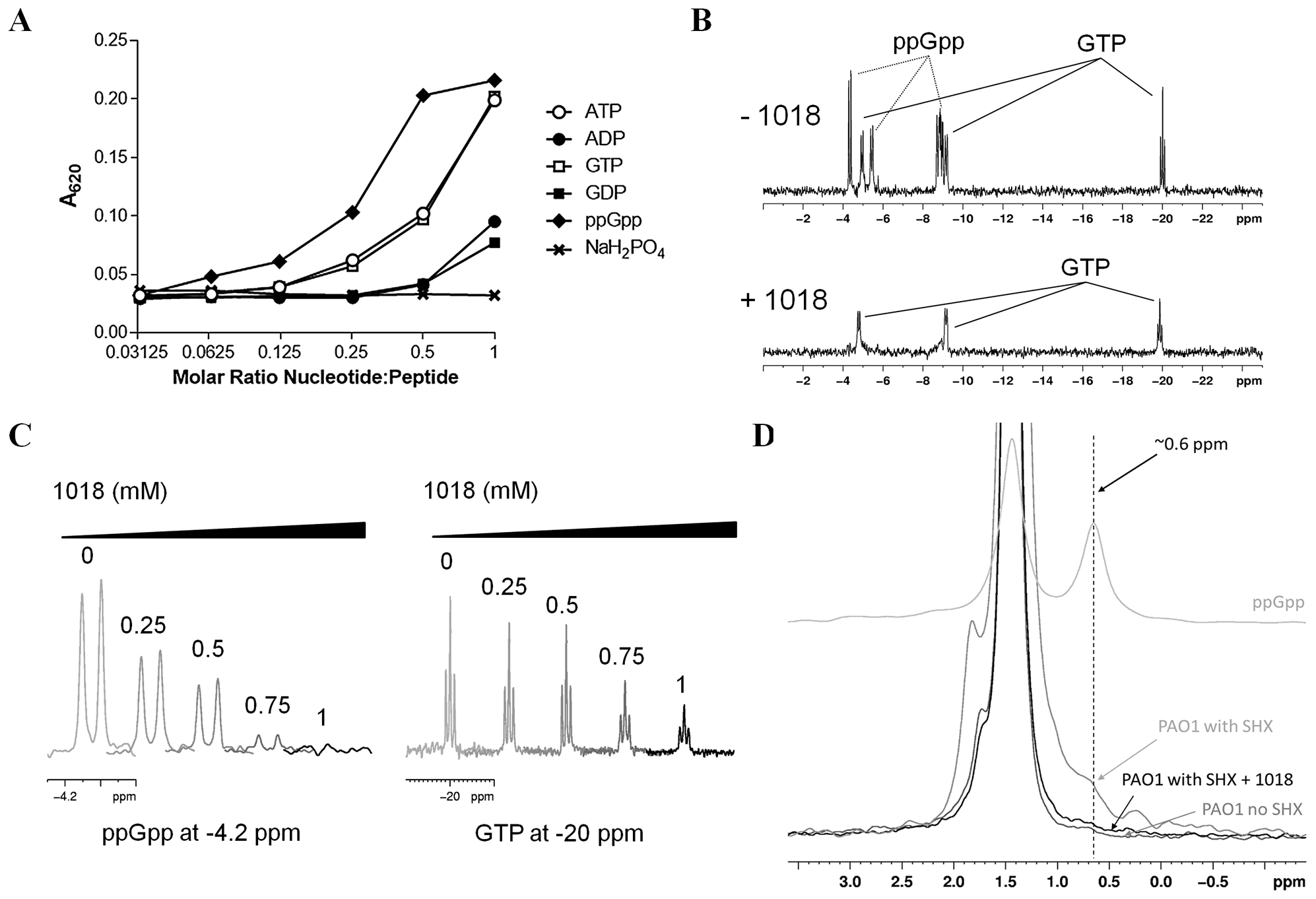 Peptide 1018 bound to ppGpp <i>in vitro</i> and led to degradation of (p)ppGpp <i>in vivo</i>.