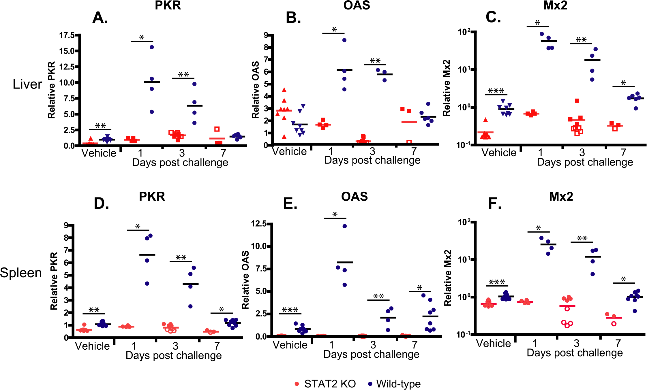 STAT2 KO hamsters fail to up-regulate the expression of interferon-stimulated genes PKR (A, D), OAS (B, E), and Mx2 (C, F) in the liver (A-C) and spleen (D-F).