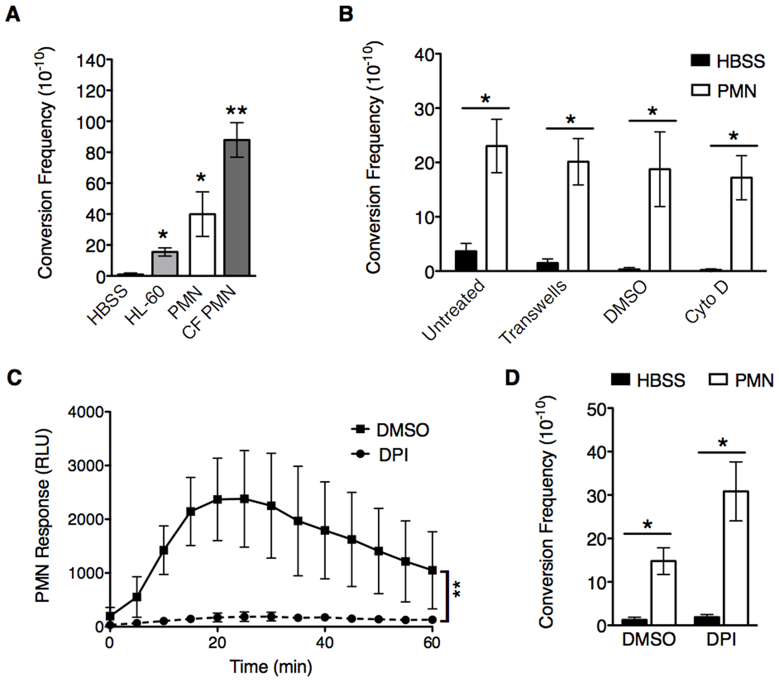PMNs induce mucoid conversion independent of bacterial uptake and the oxidative burst response.