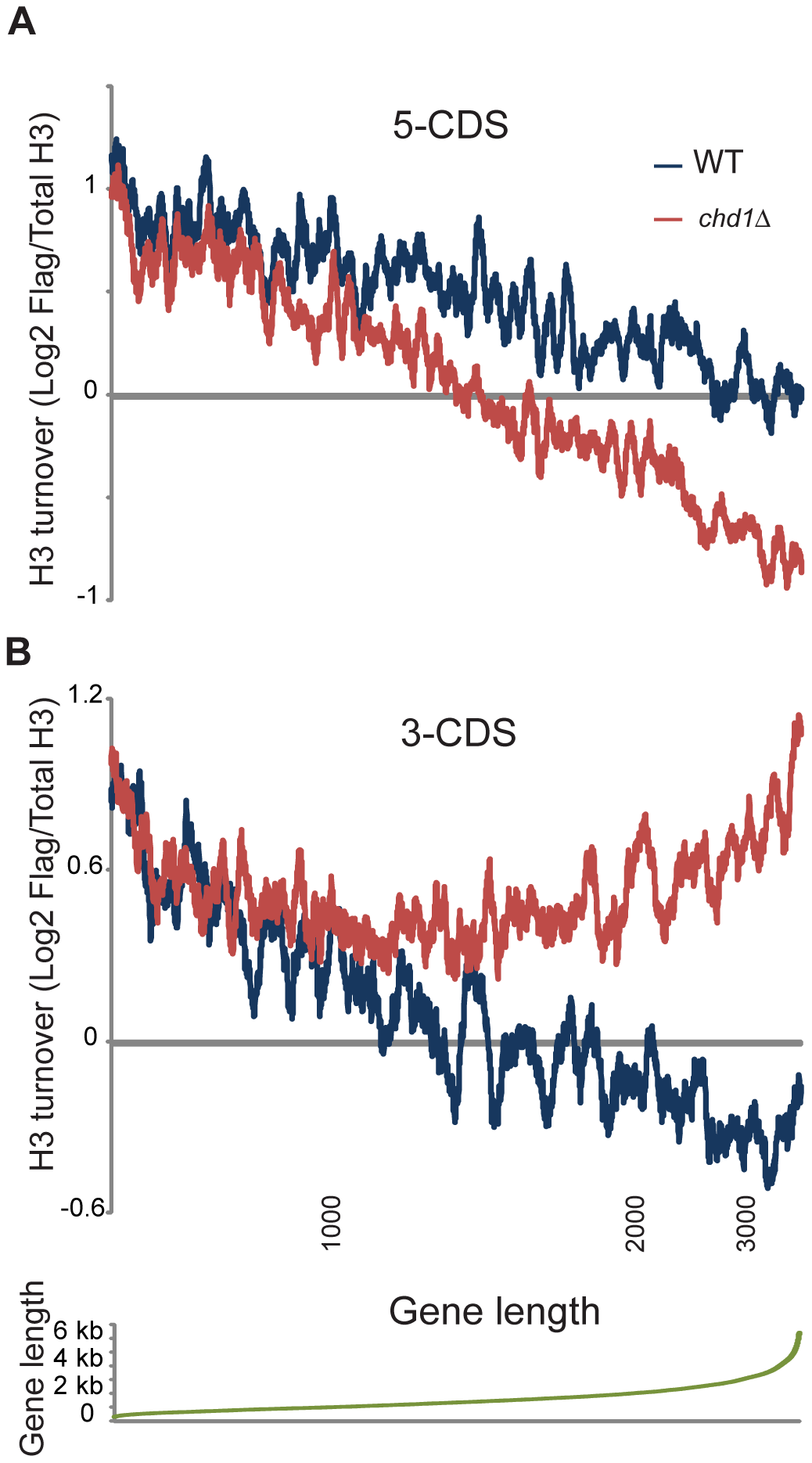 Length dependence of Chd1 effects on H3 replacement.