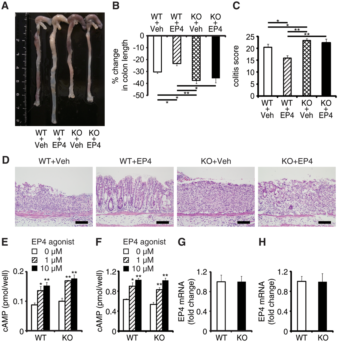 EPRAP deficiency impairs the anti-inflammatory effect of PGE/EP4.