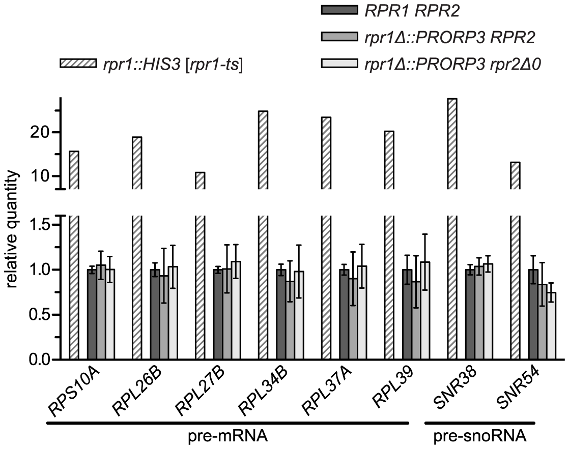 Levels of putative non-tRNA RNase P-substrates in RNase P-swapped yeast strains.