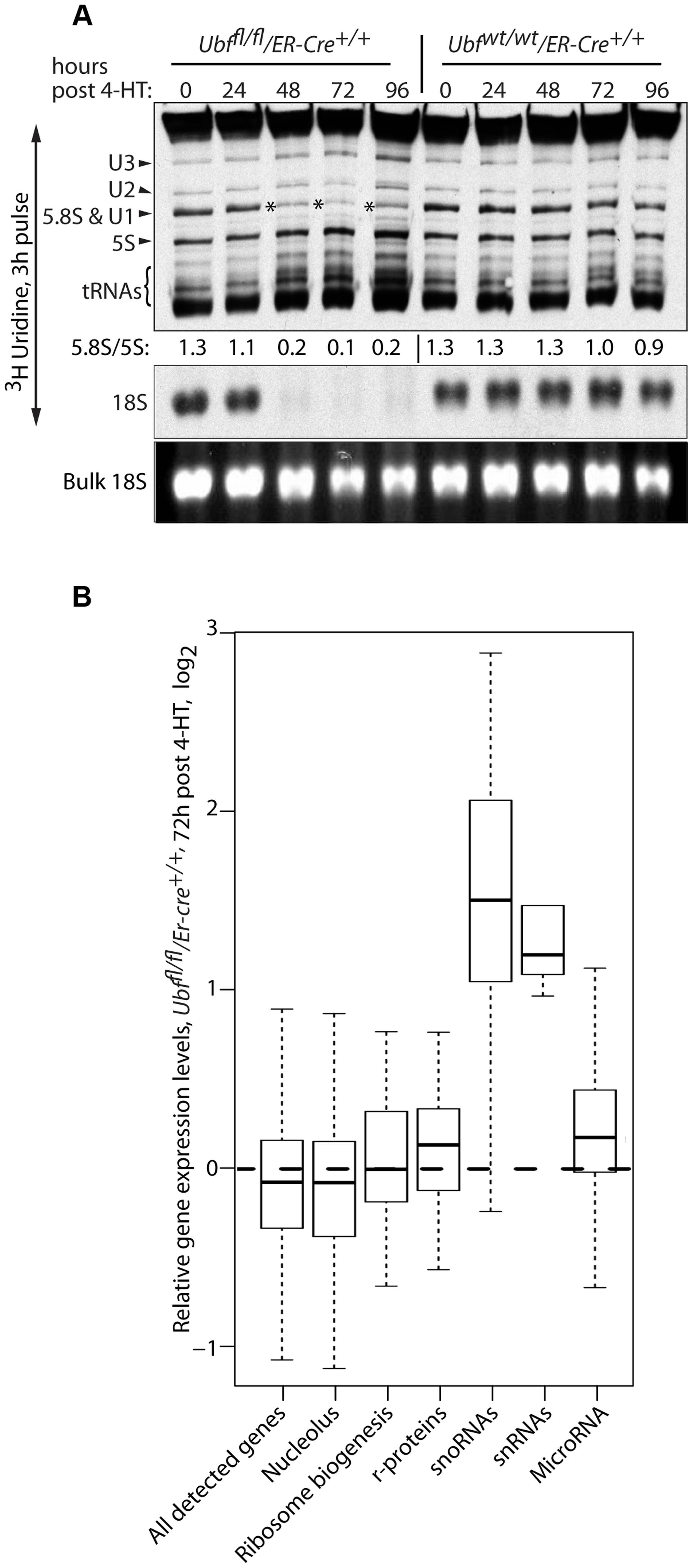 UBF elimination has only minor effects on global gene expression.