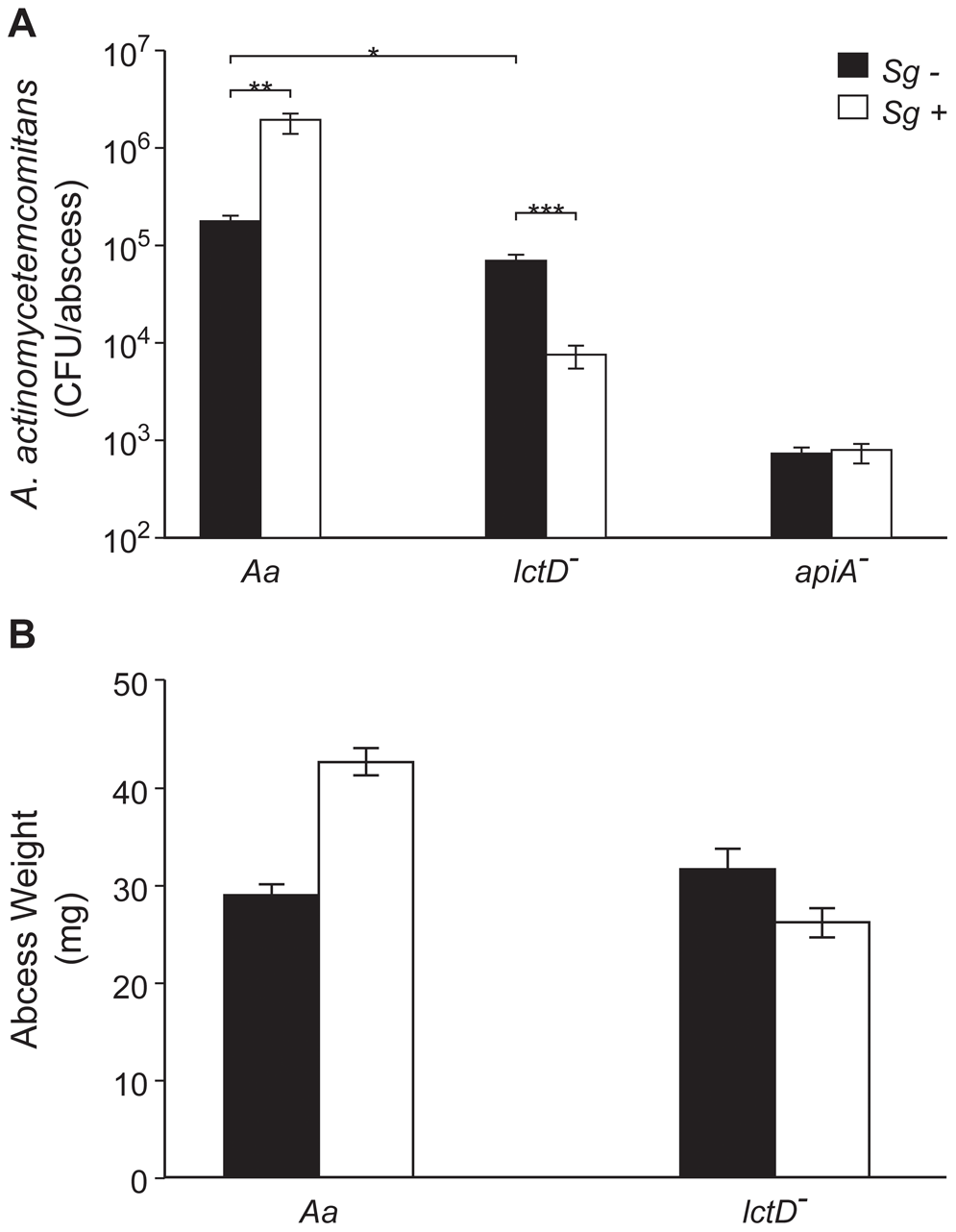 Persistence of <i>A. actinomycetemcomitans</i>, <i>A. actinomycetemcomitans lctD</i><sup>-</sup>, and <i>A. actinomycetemcomitans apiA</i><sup>-</sup> in mono- or co-culture in a murine abscess model.