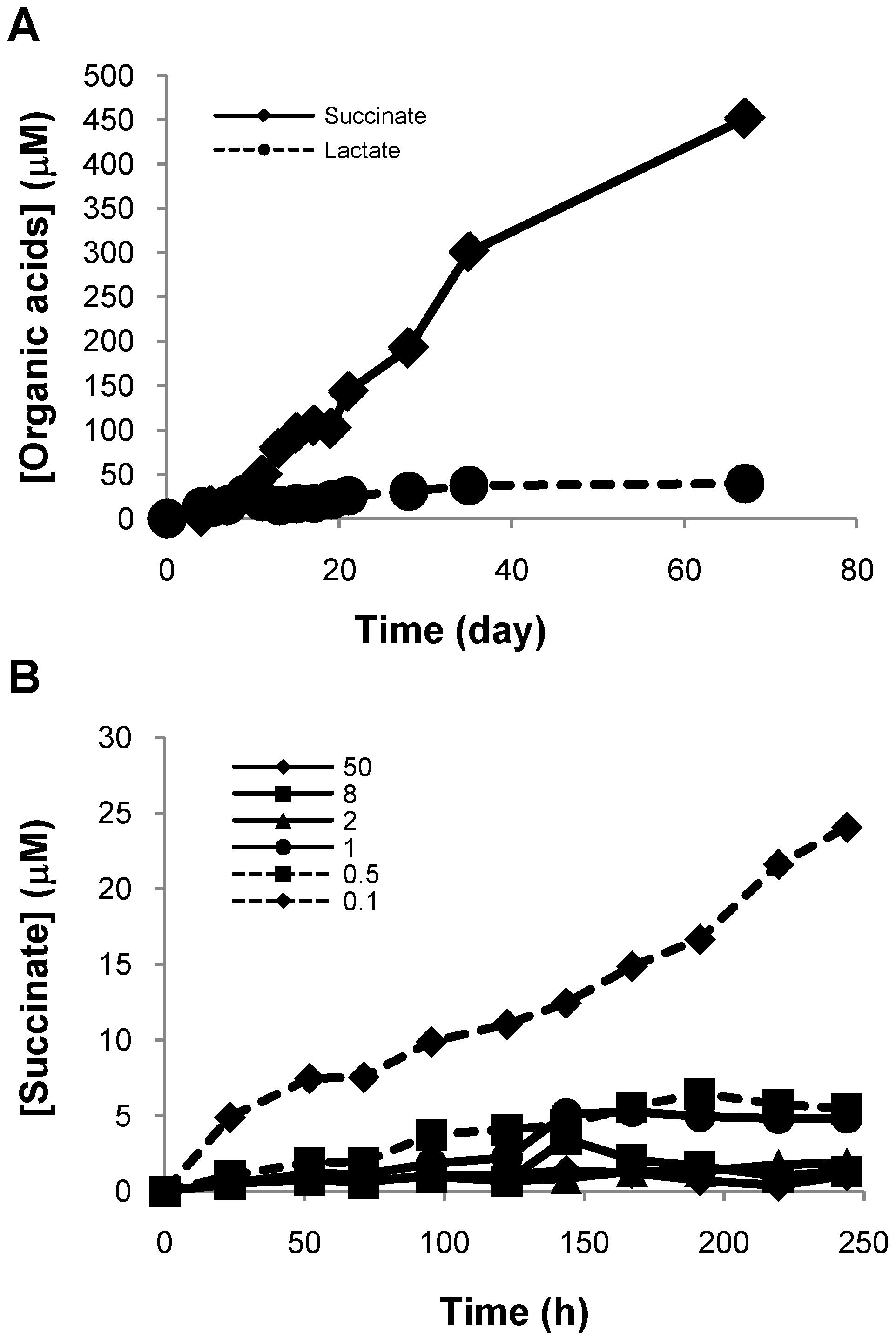 Succinate accumulates in supernatants of H<sub>37</sub>Rv culture under anaerobic condition.