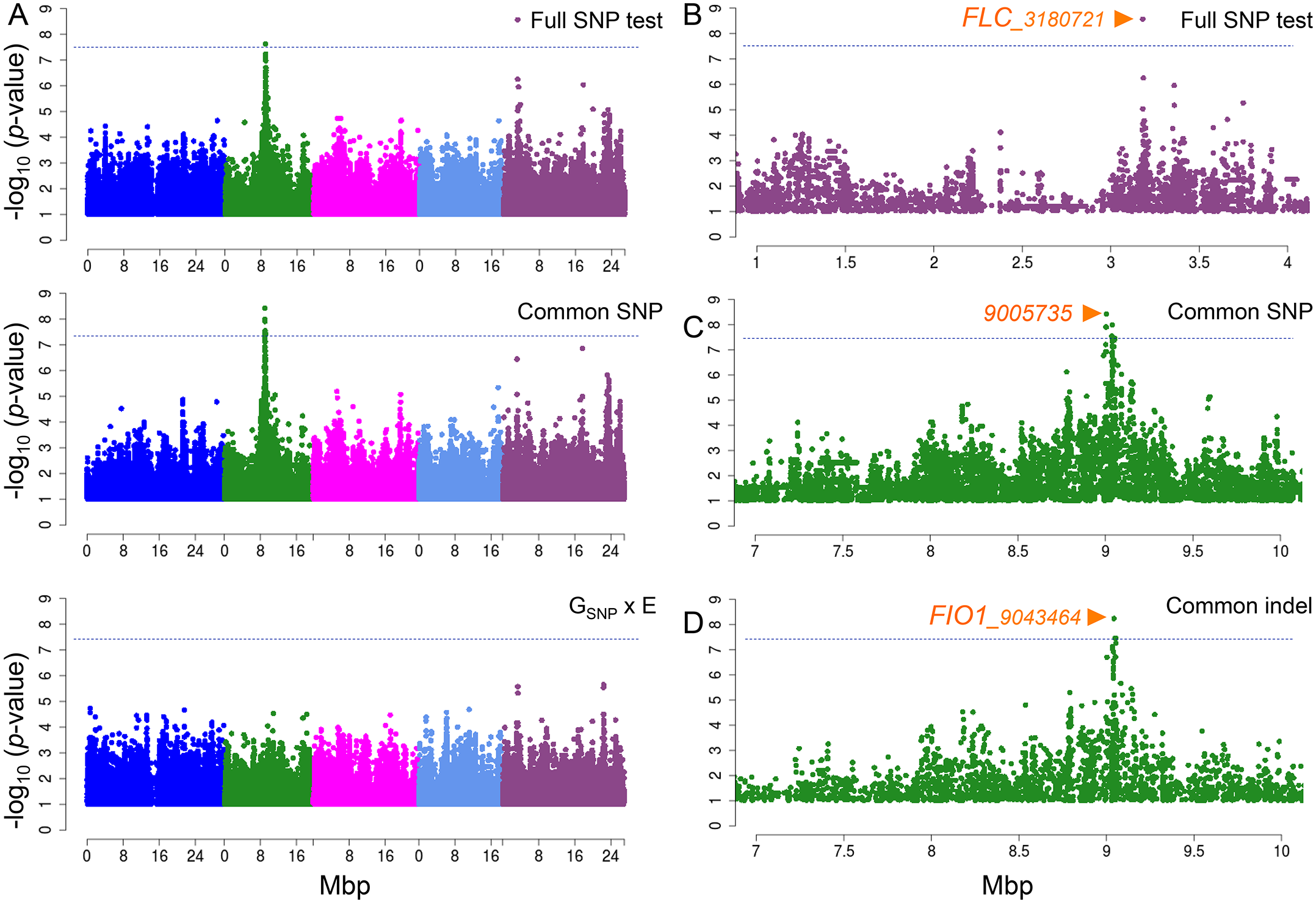 Manhattan plots of GWAS results for flowering time at 10°C and 16°C using MTMM.