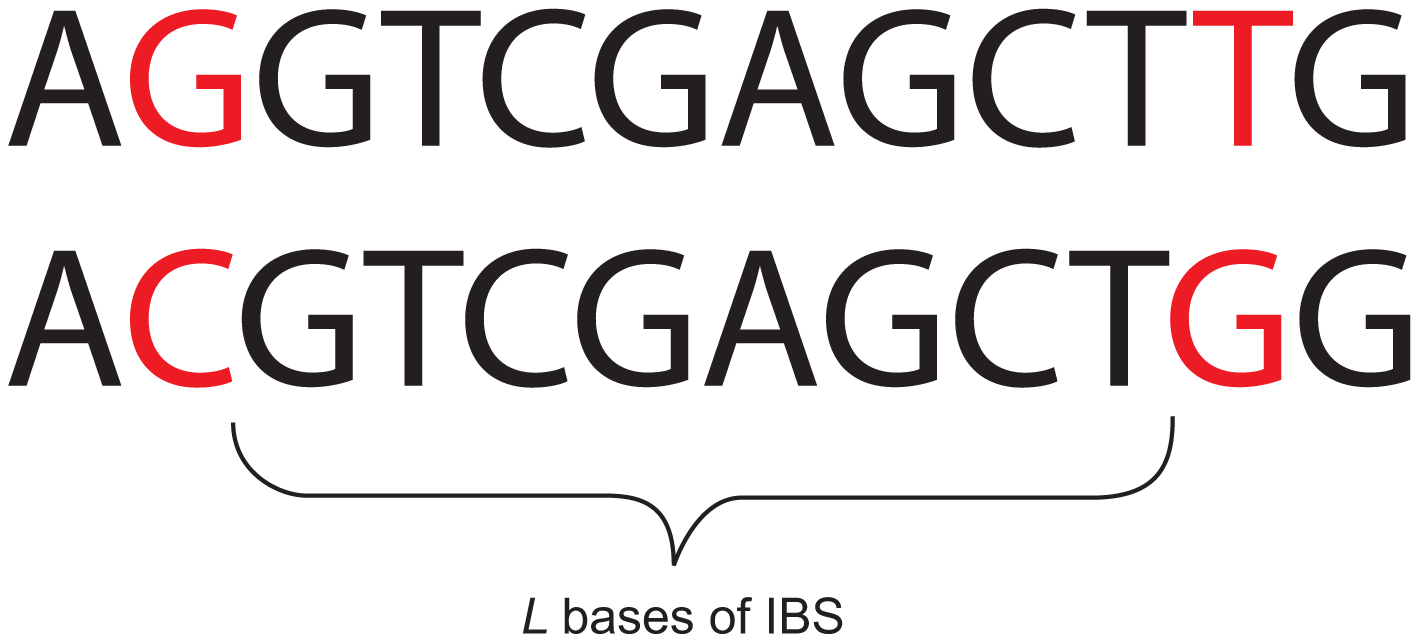 An eight base-pair tract of identity by state (IBS).