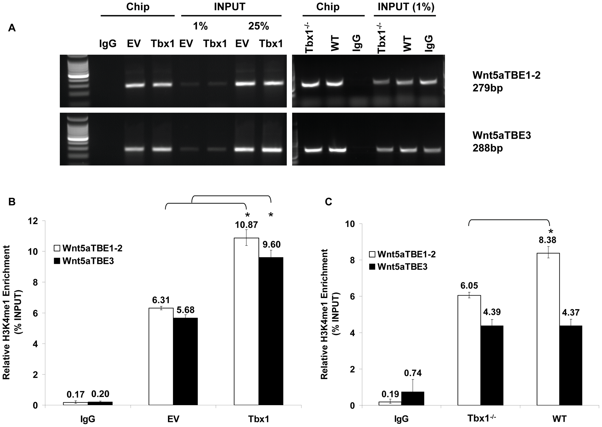 Tbx1 enhances H3K4 monomethylation of TBE regions of <i>Wnt5a</i> in cultured cells and in vivo.