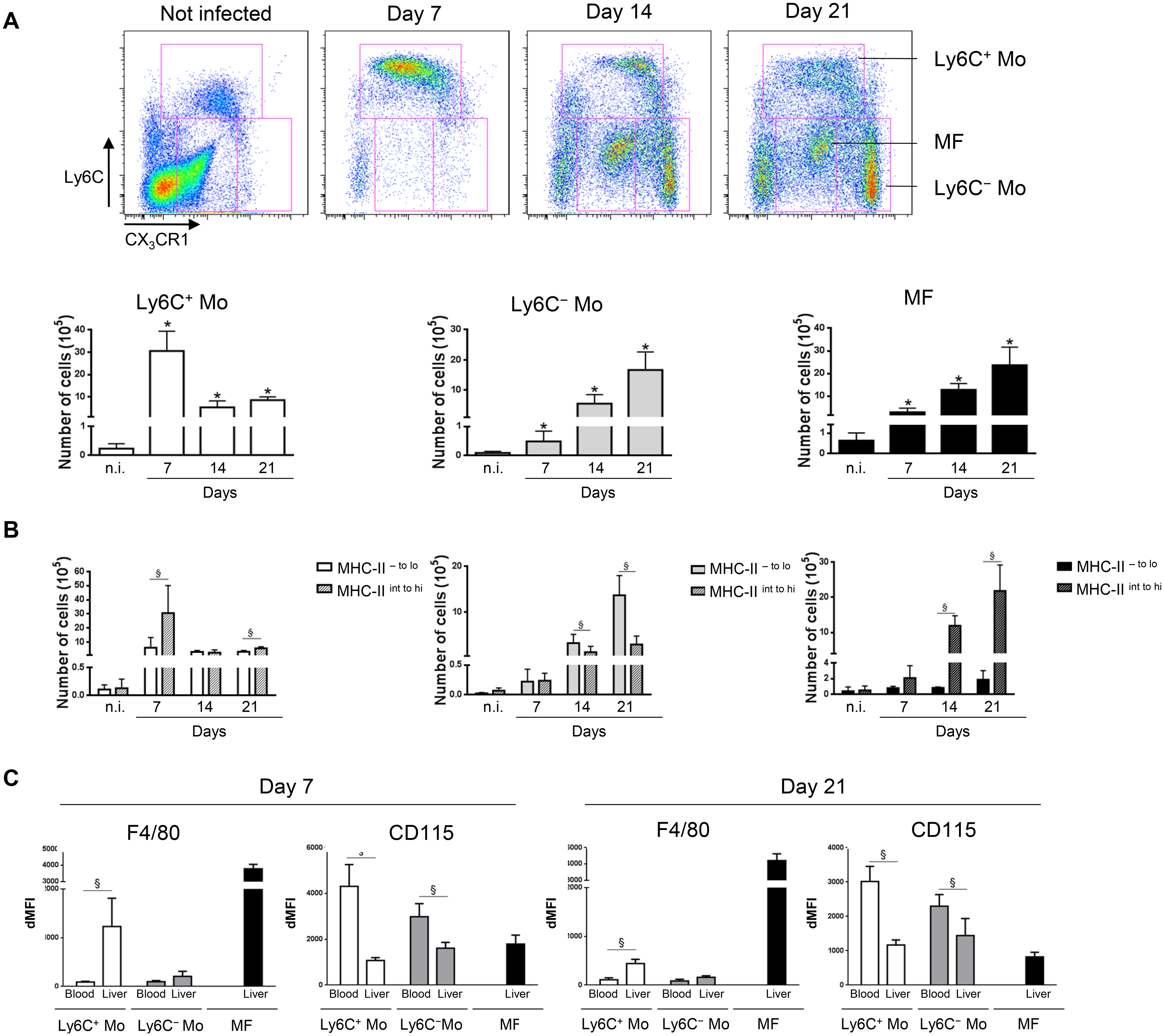 Distinct liver myeloid cell subsets are sequentially mobilized in <i>T</i>. <i>congolense</i>-infected mice.