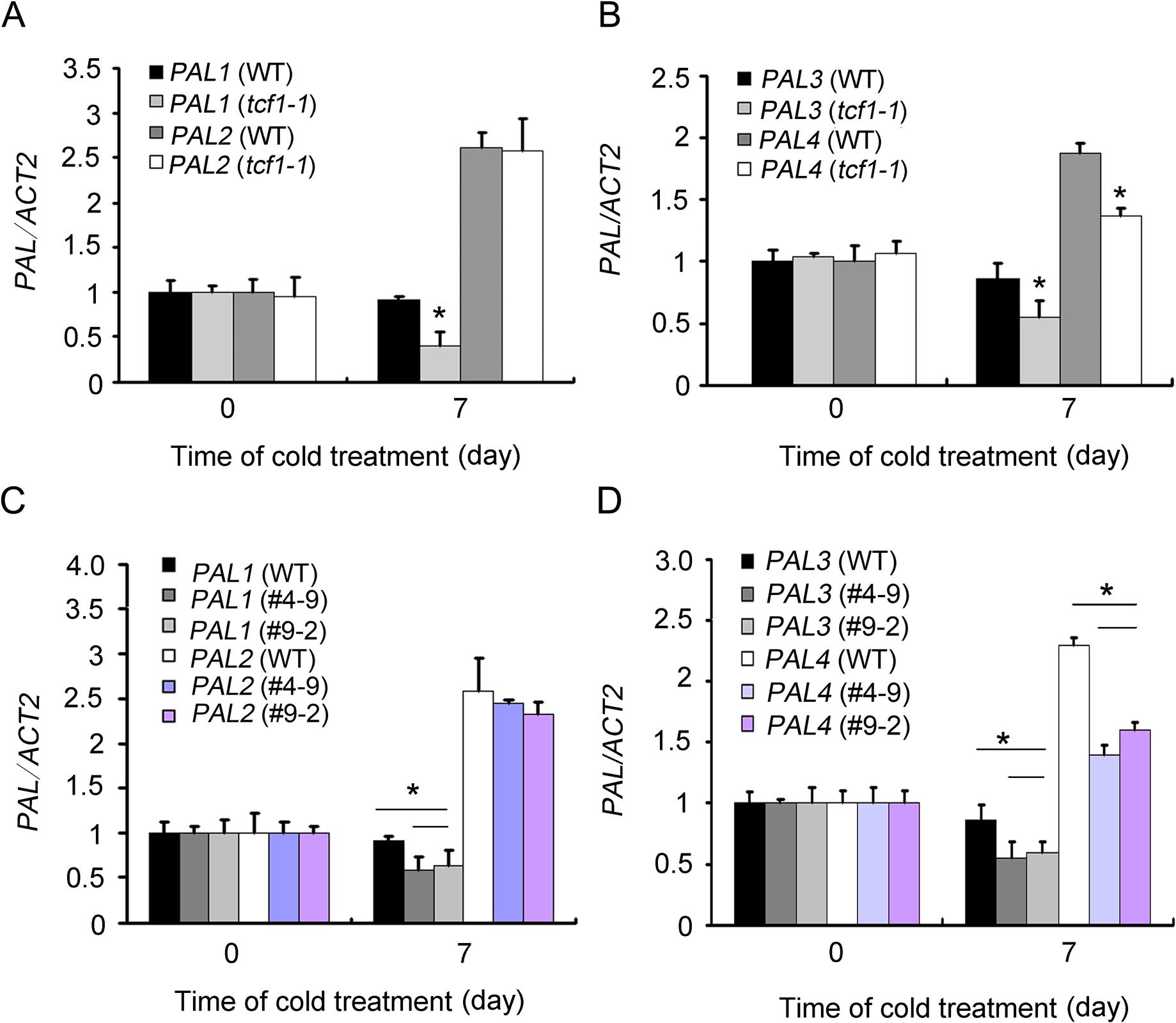 Expression analysis of <i>PAL</i> genes in <i>tcf1</i> and <i>amiRNA-BCB</i> mutants.