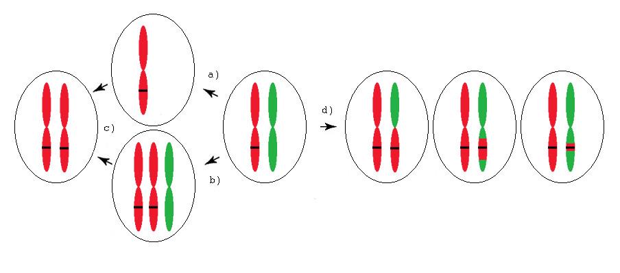 Mechanismy vzniku aUPD (získané uniparentální disomie) u onkologických onemocnění