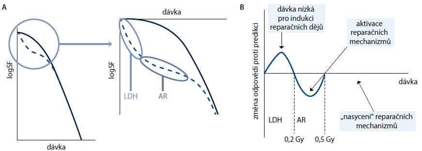 Odpověď buněk na ionizující záření. Obr. 1 A. Klasická křivka (plná čára) předpokládá existenci raménka odpovídajícího reparaci ze subletálního poškození. Křivka beroucí v úvahu hypersenzitivitu na nízké dávky (LDH) a adaptivní odpověď (AR) je při nízkých dávkách odlišná (přerušovaně) a v oblasti nízkých dávek klesá výrazně strměji, než klasický model předpokládá. Obr. 1 B. Změna odpovědi proti původnímu modelu. Při nízkých dávkách je odpověď vyšší, než je predikováno, protože nedochází k aktivaci reparačních dějů (oblast hypersenzitivity na nízké dávky, HRS), po aktivaci reparačních enzymů je naopak nižší (oblast adaptivní odpovědi, AR) a až po vyčerpání kapacity reparačních enzymů odpovídá klasickému modelu. SF – frakce přežívajících buněk.