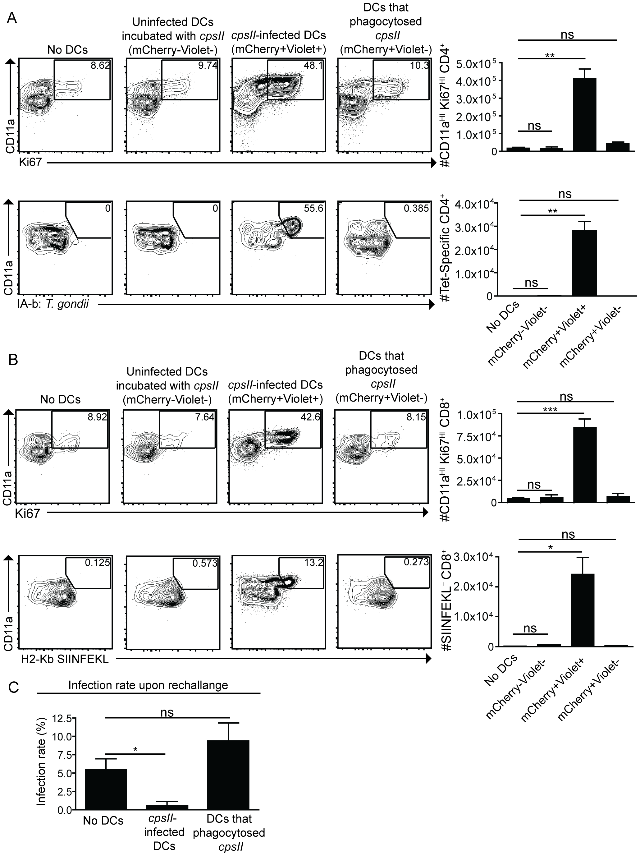 Infected cells are sufficient to induce CD4<sup>+</sup> and CD8<sup>+</sup> T cell responses.