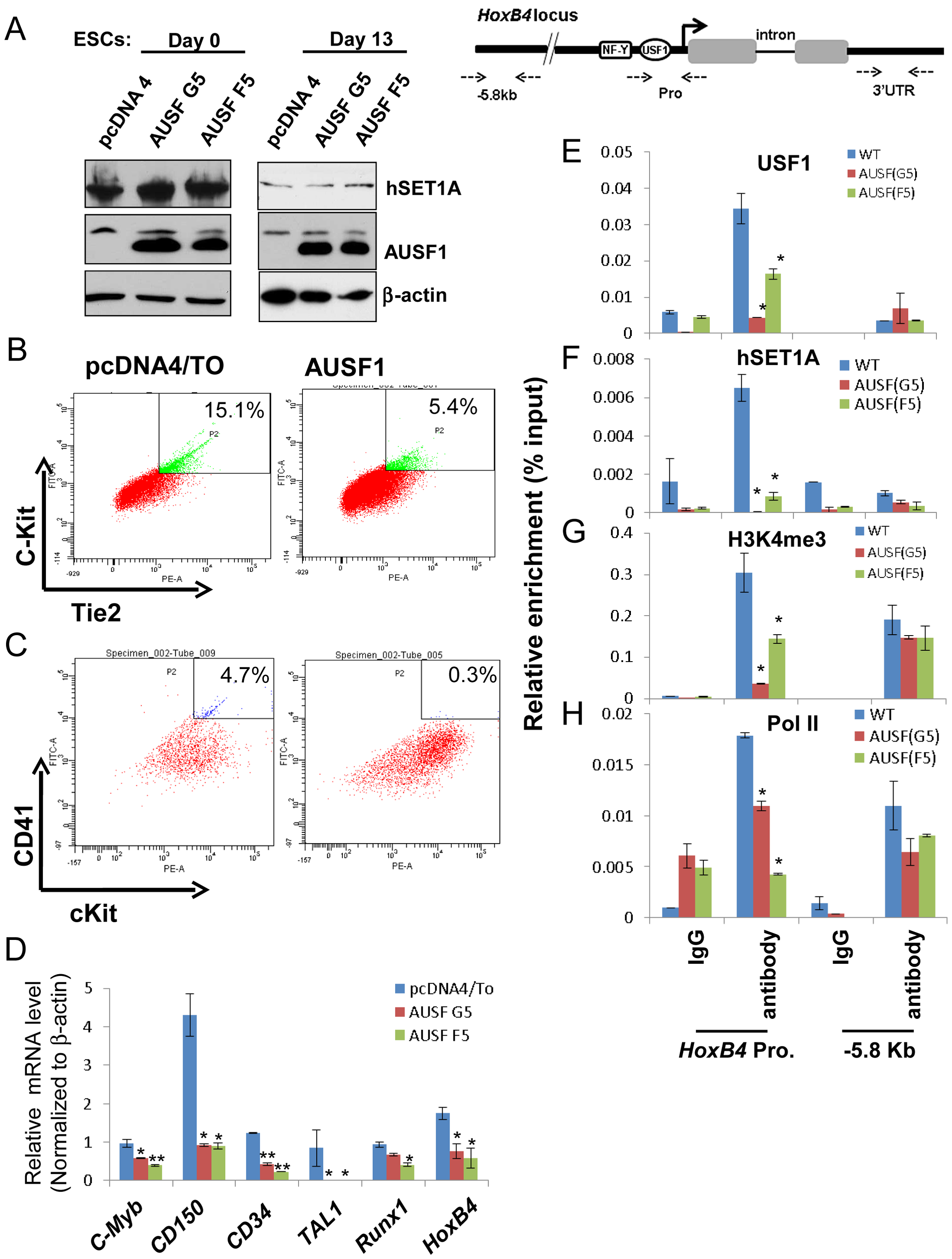 USF1 regulates ESC fate and hematopoietic differentiation by modulating bivalent domains of HS/PC-specific genes.