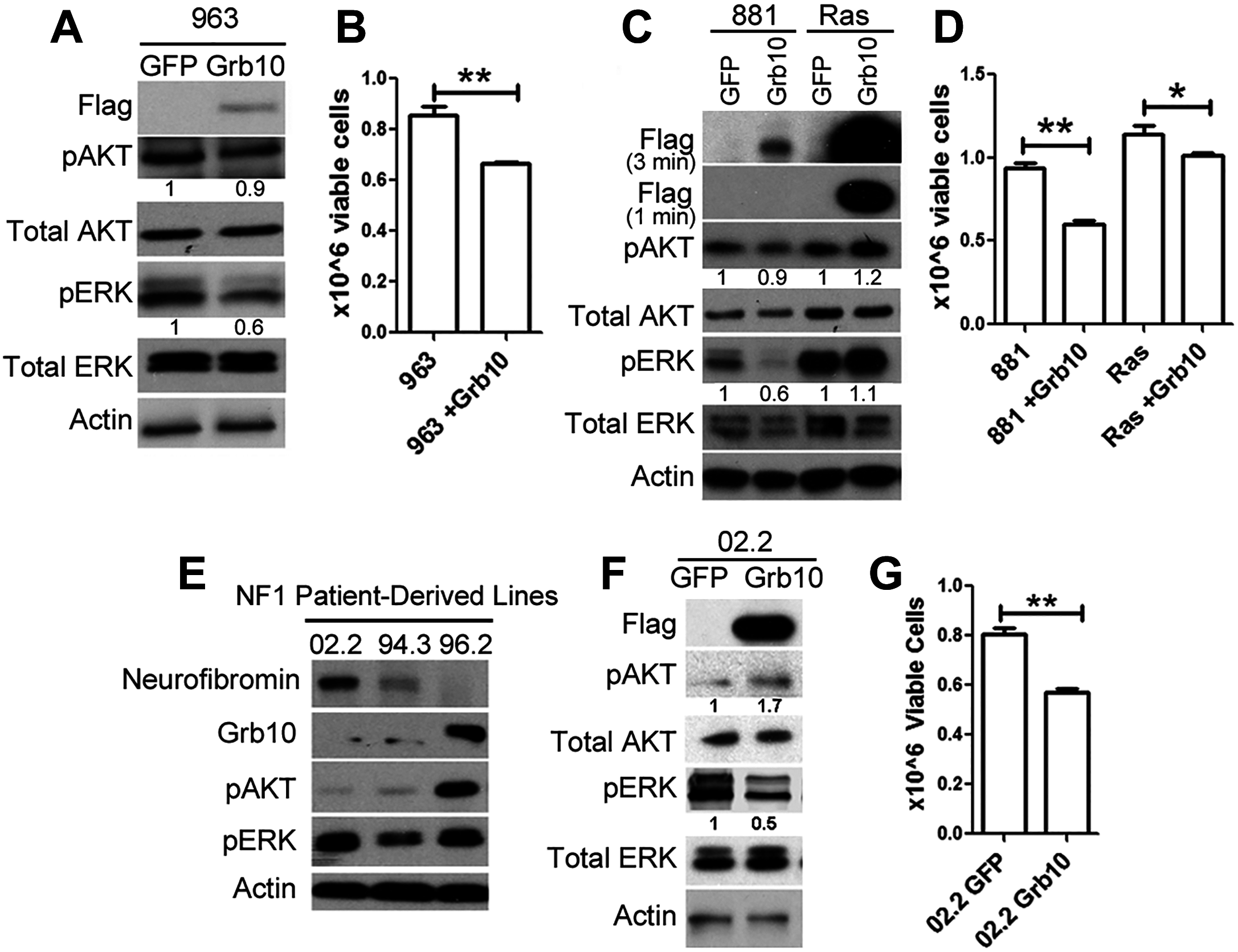 <i>Grb10</i> expression in diverse tumors suppresses proliferation.