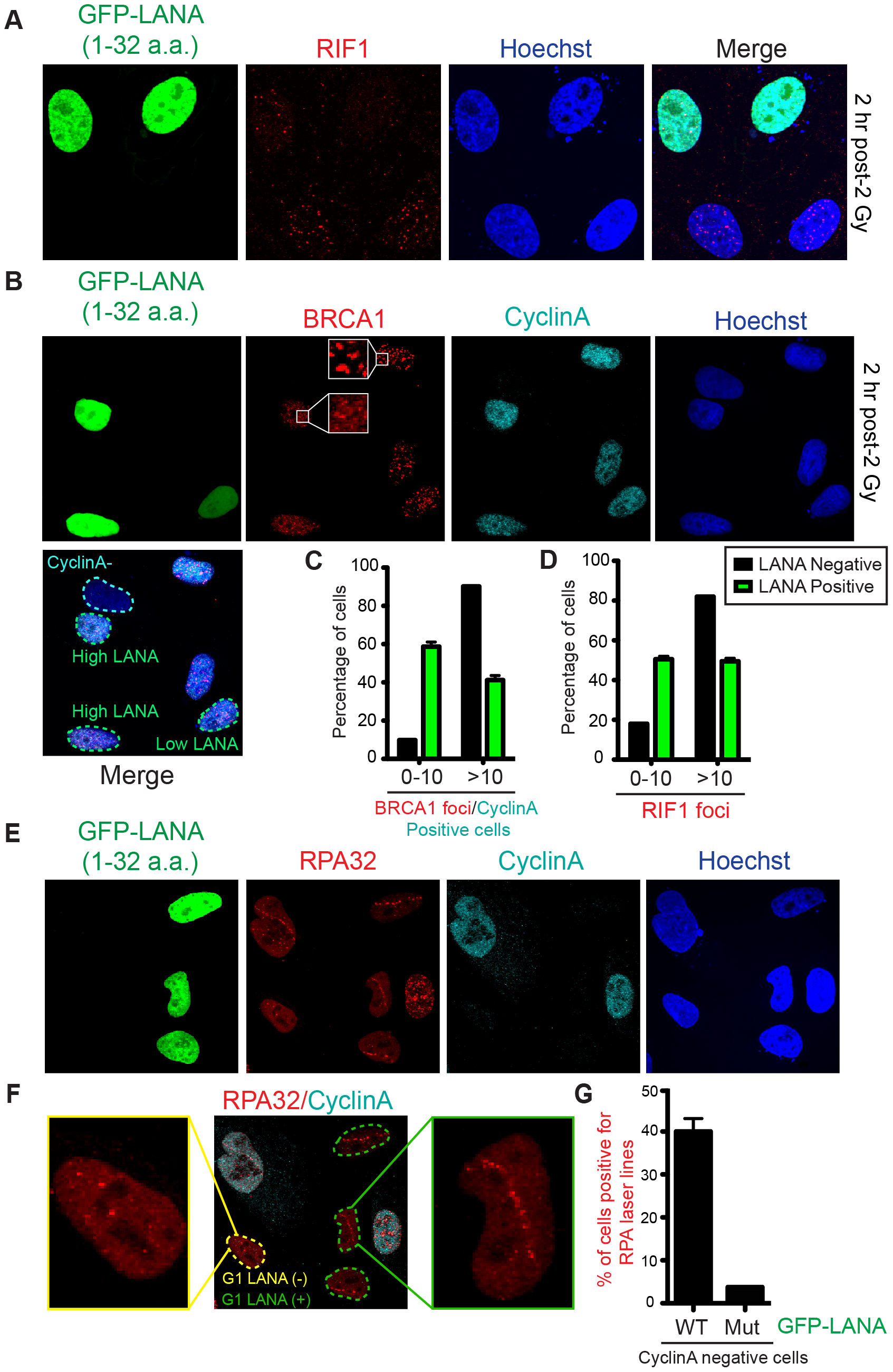 Nucleosome acidic patch promotes RNF168-dependent DDR signaling and inhibition of DNA resection in G1.
