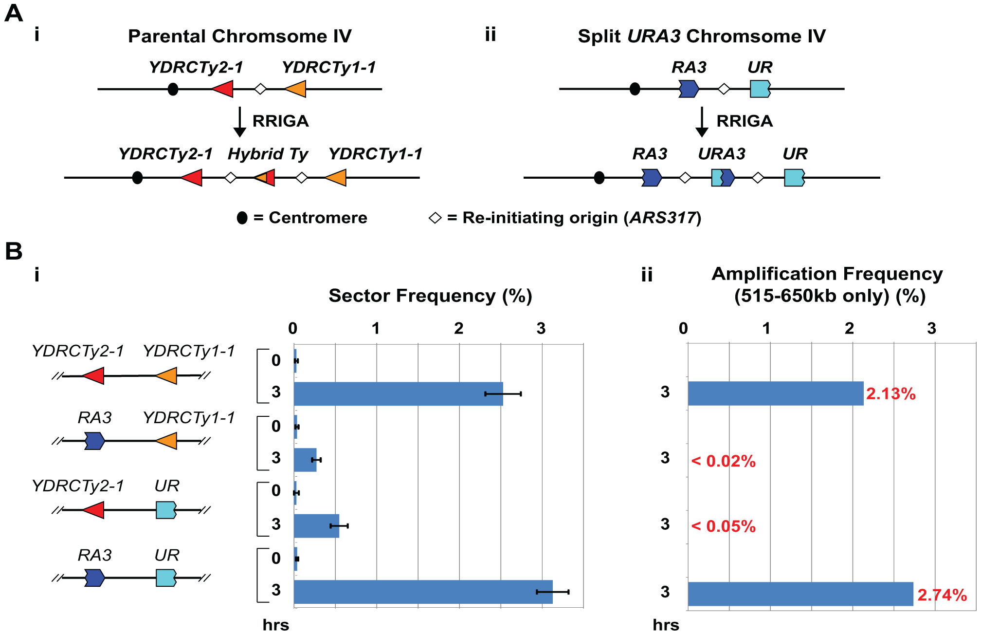 Homologous sequences are necessary and sufficient in <i>cis</i> to support RRIGA.