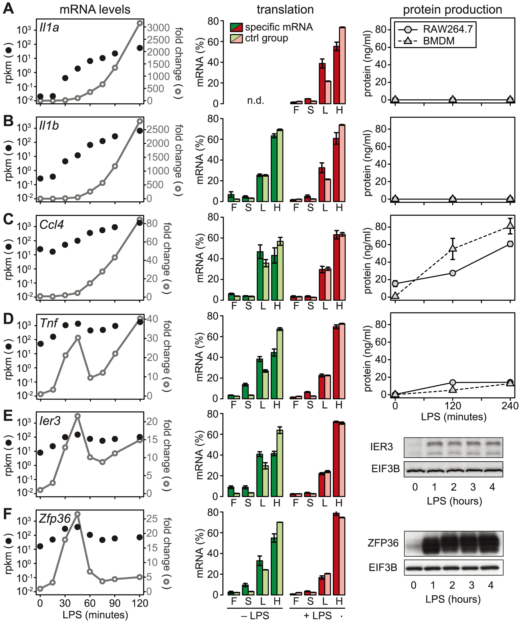 LPS-induced changes in mRNA levels, translation and protein production.