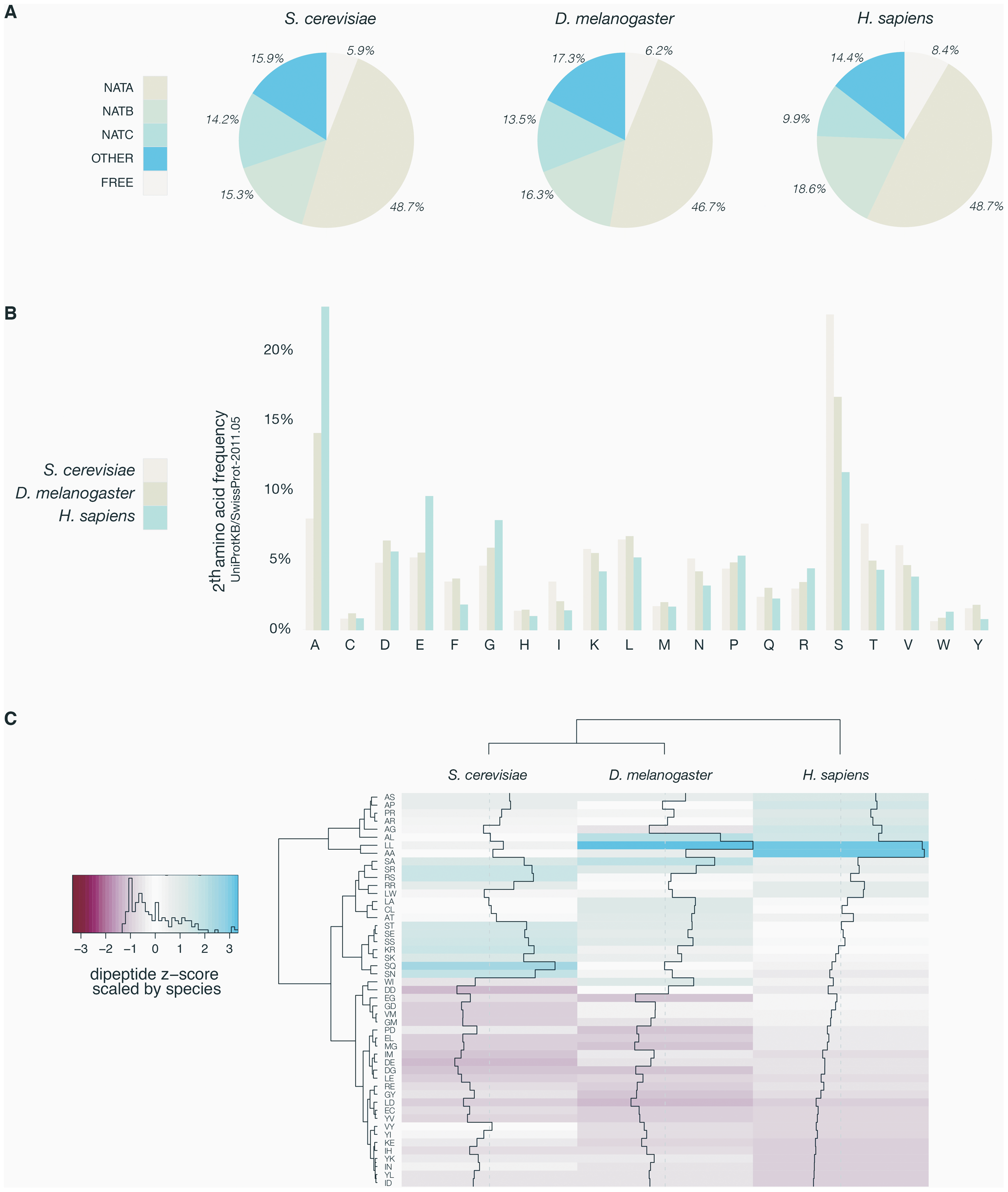 Overview of yeast, fruit fly, and human N-termini in NAT-classes and amino acid prevalence.