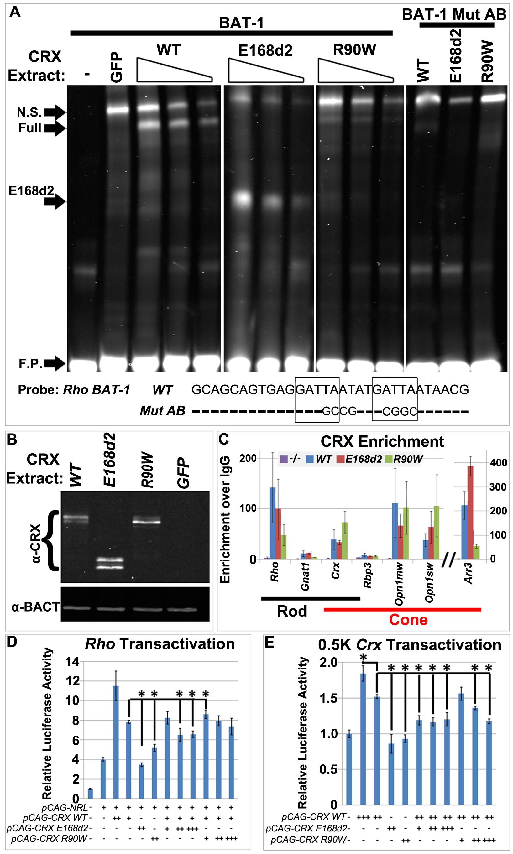 CRX<sup>[E168d2]</sup> and CRX<sup>[R90W]</sup> affect target gene transcription through distinct molecular mechanisms.