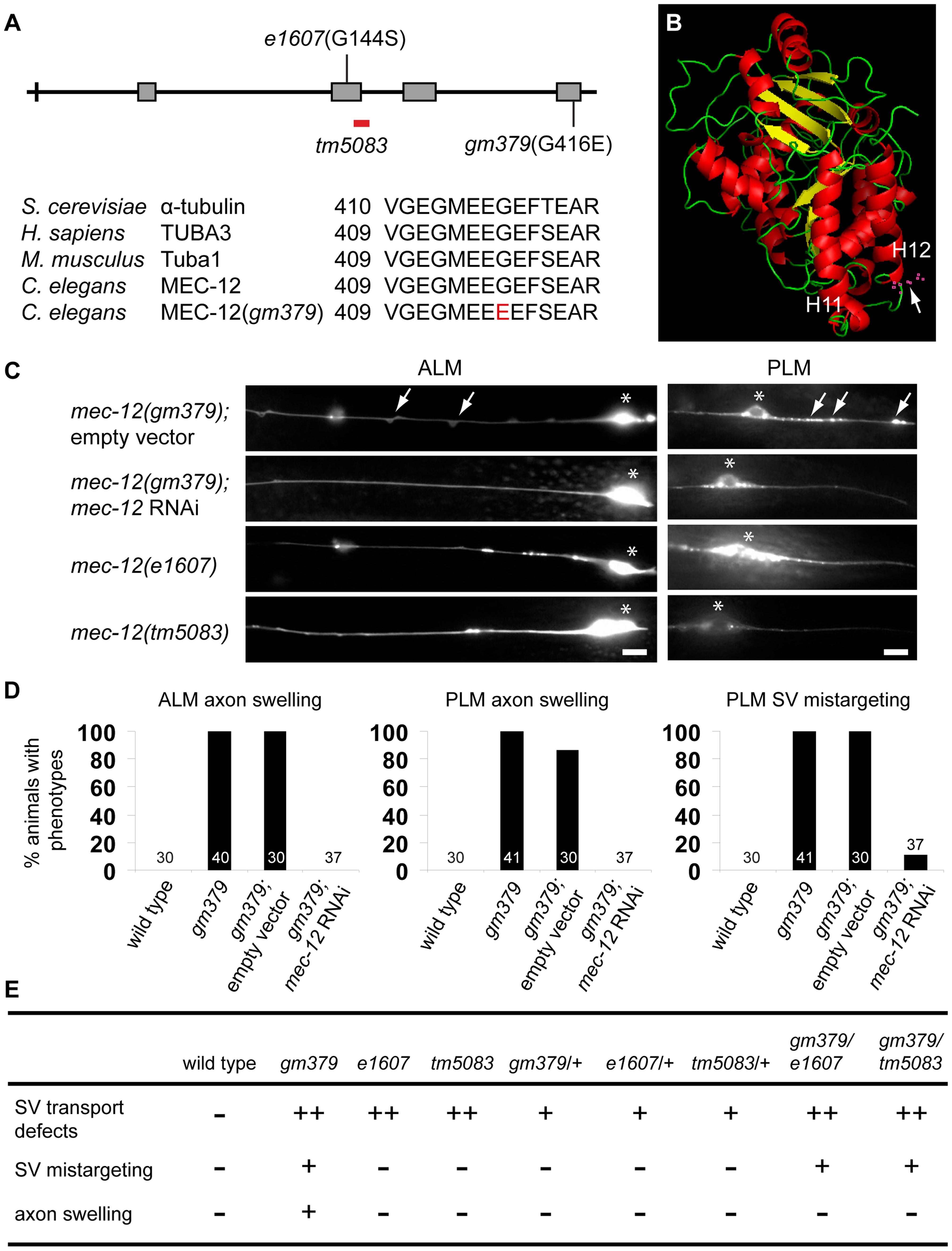 Genetic analysis of <i>gm379</i> and other <i>mec-12</i> alleles.