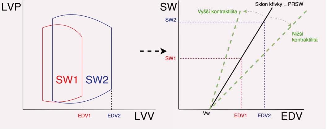 Způsob stanovení preload recruitable stroke work (PRSW) a význam sklonu křivky PRSW (Mw). Na obrázku vlevo je znázorněna křivka PV diagramu a změna tepové práce při různém enddiastolickém objemu, na obrázku vpravo je znázorněn způsob odečtu přímky PRSW a vztah Mw a kontraktility.