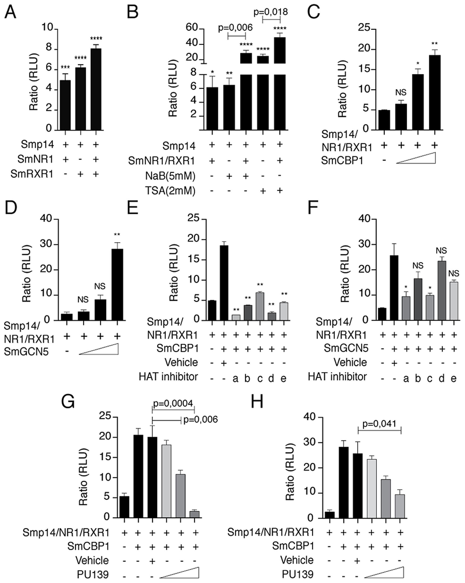 <i>Smp14</i> promoter-dependent activation by the SmRXR1/SmNR1 heterodimer and the HATs SmGCN5 and SmCBP1.