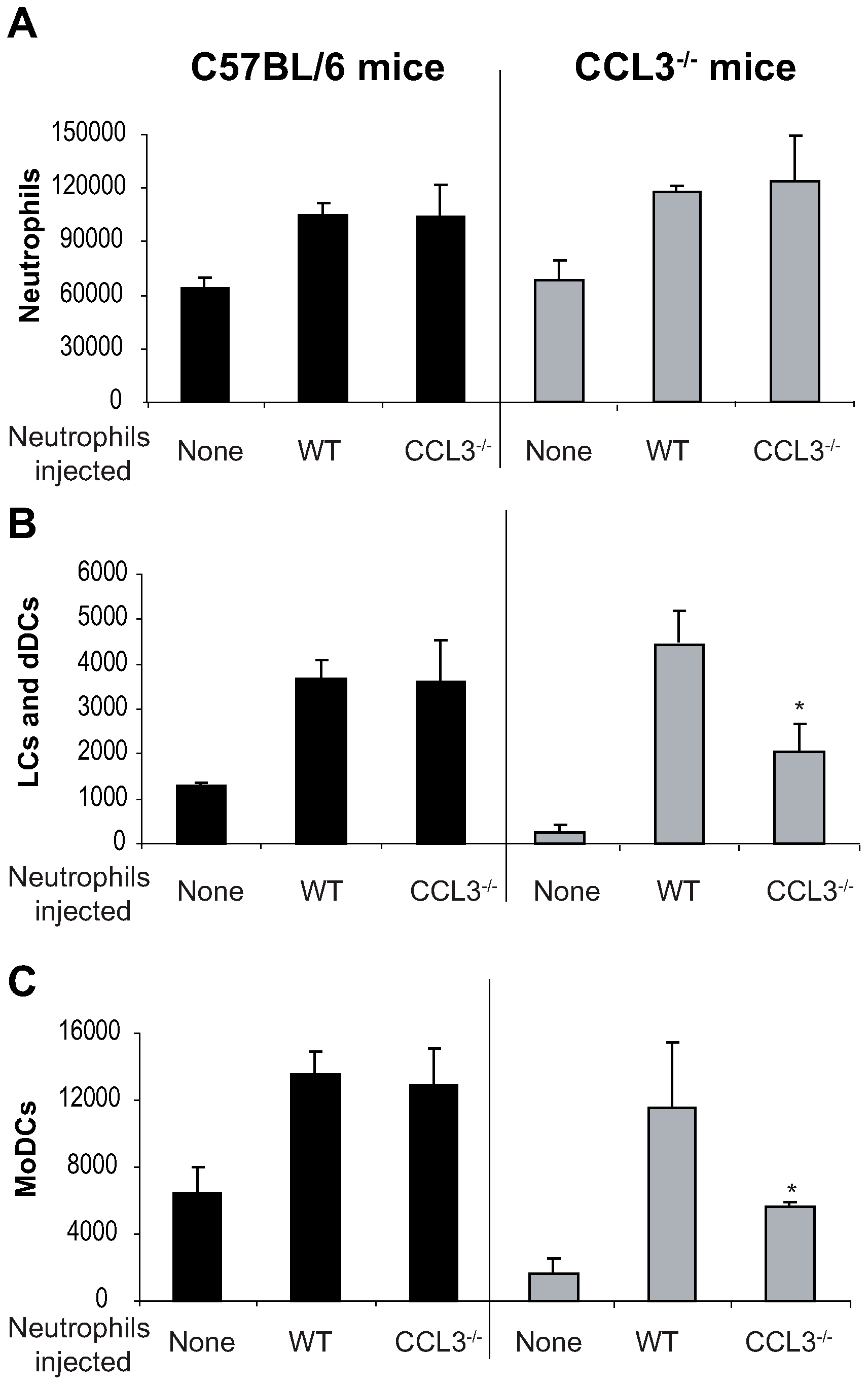 The CCL3 secreted by neutrophils is the major chemoattractant for DCs one day after <i>L. major</i> inoculation.
