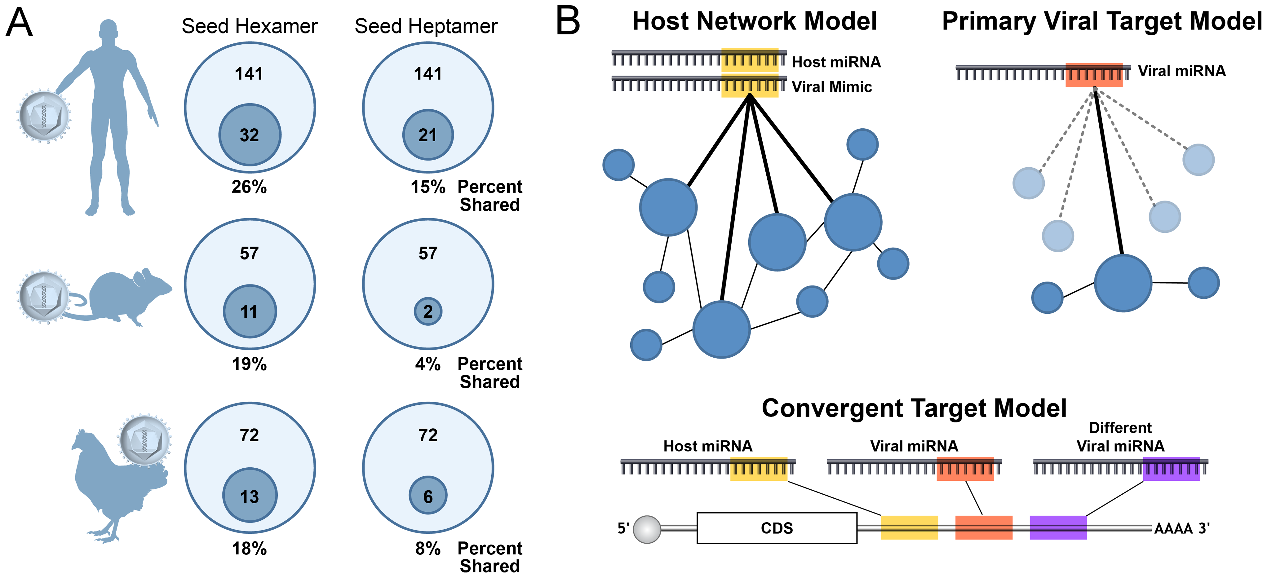 A minority of viral miRNAs mimic host miRNAs through identical seed sequences.