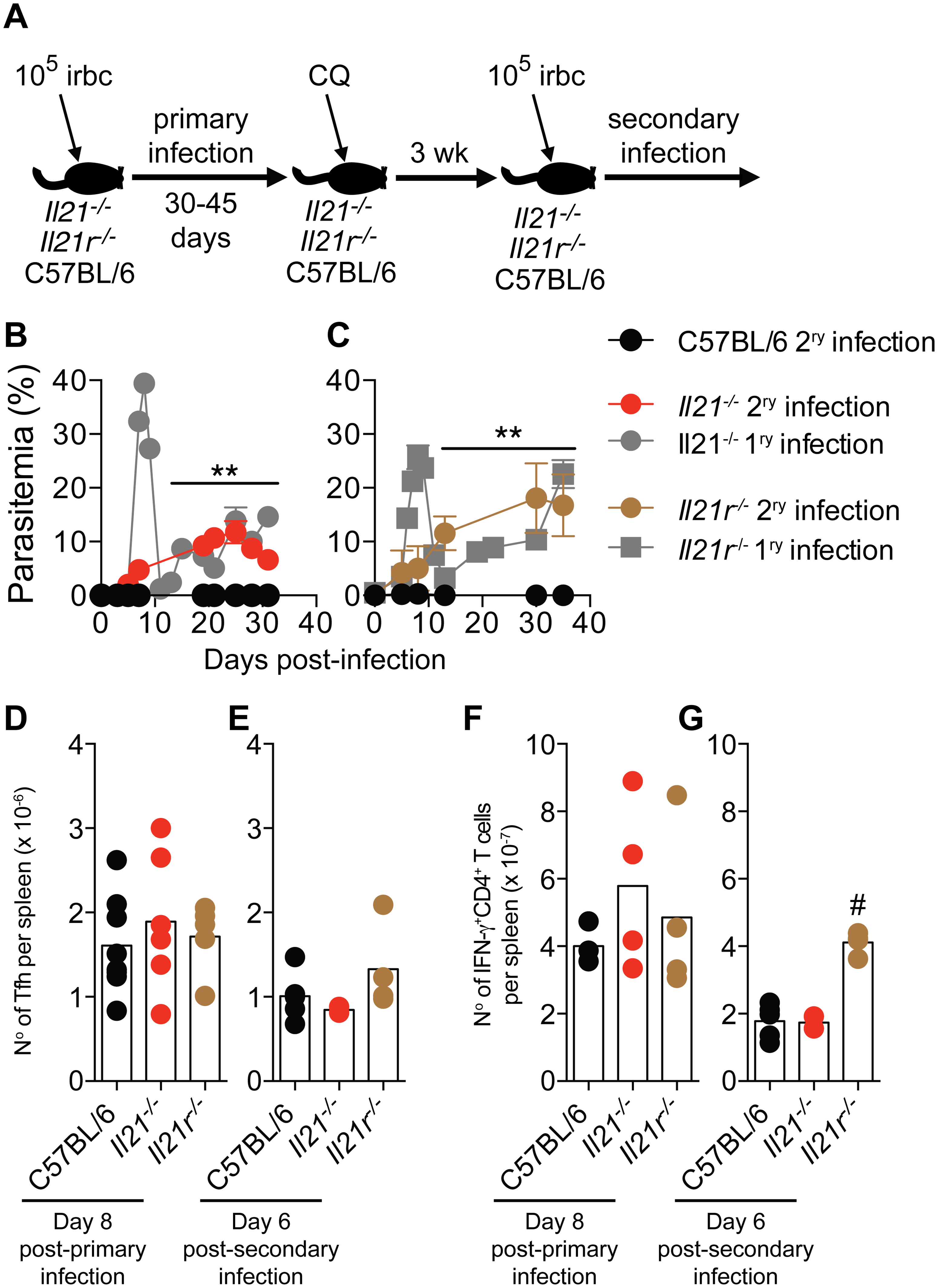 Mice deficient in IL-21 signaling fail to develop immunity to a secondary <i>P</i>. <i>chabaudi</i> infection.