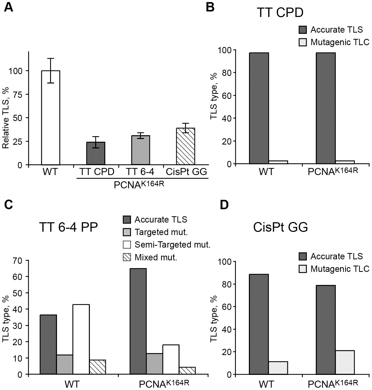 TLS in <i>Pcna<sup>K164R/K164R</sup></i> mouse embryo fibroblasts.