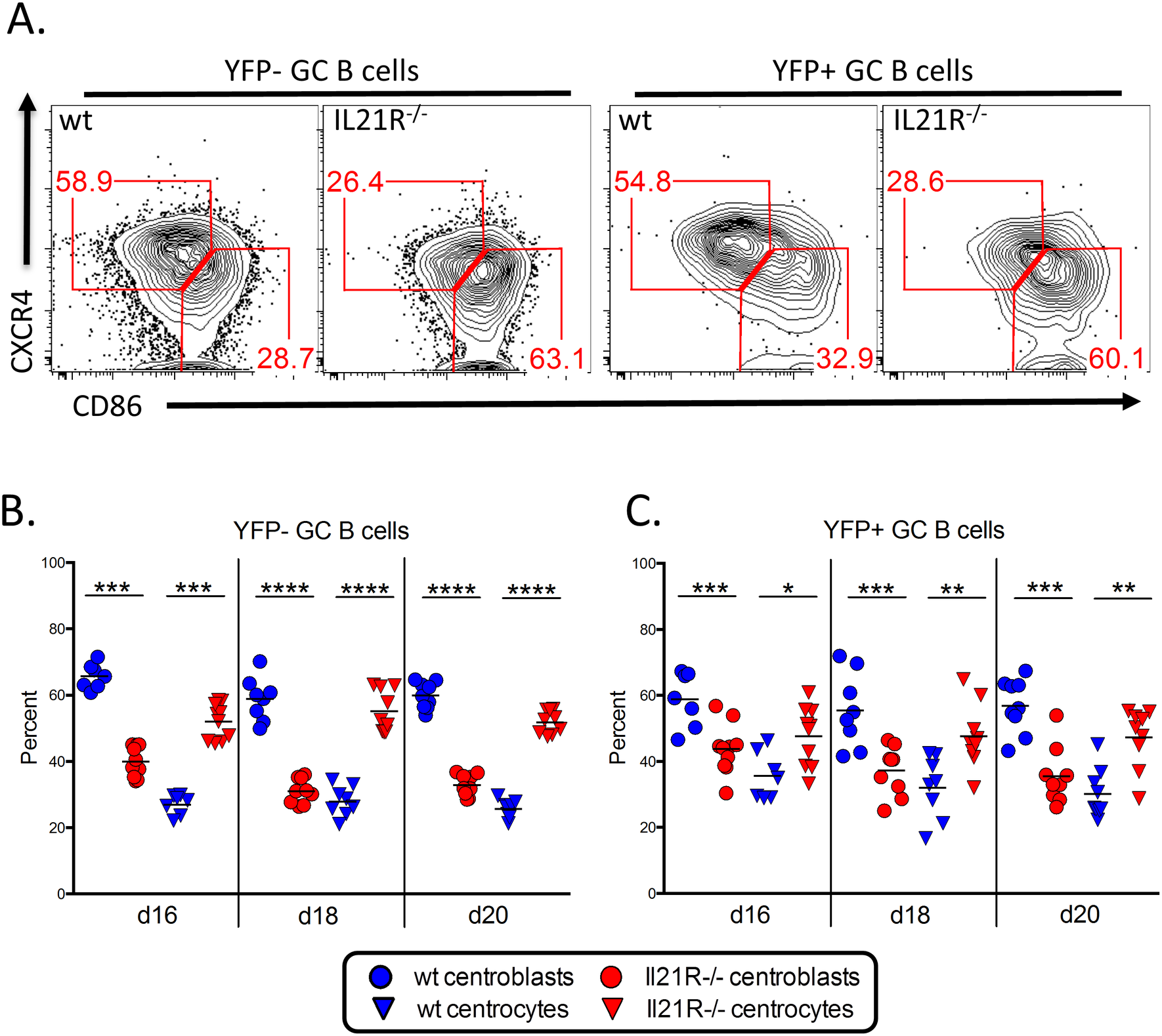 Altered GC B cell populations in IL-21R-/- mice.