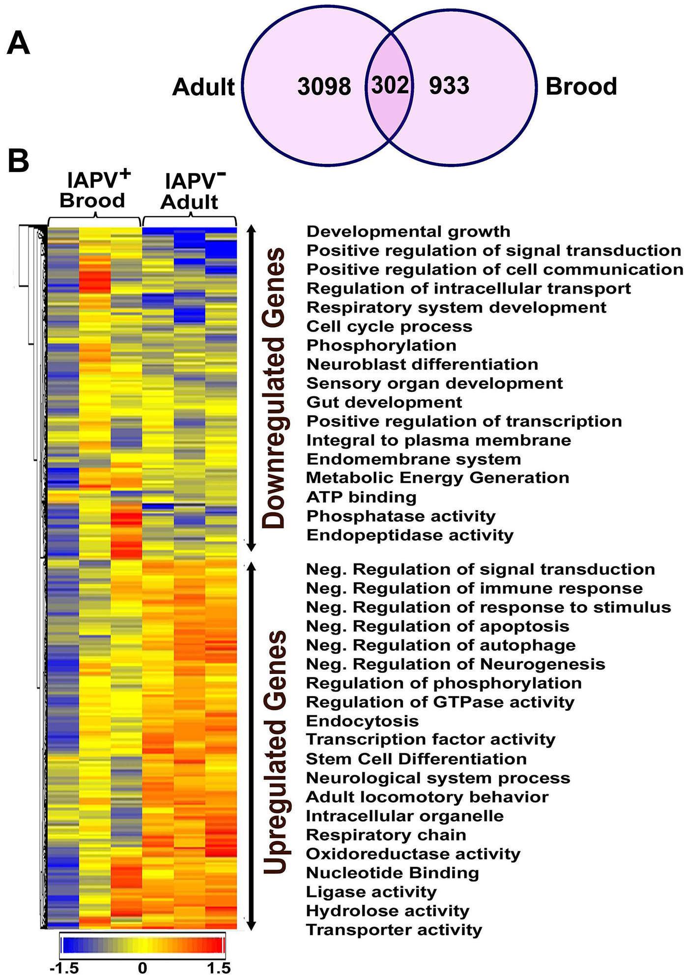 An overview of gene expression profiles in IAPV infected adults and brood.