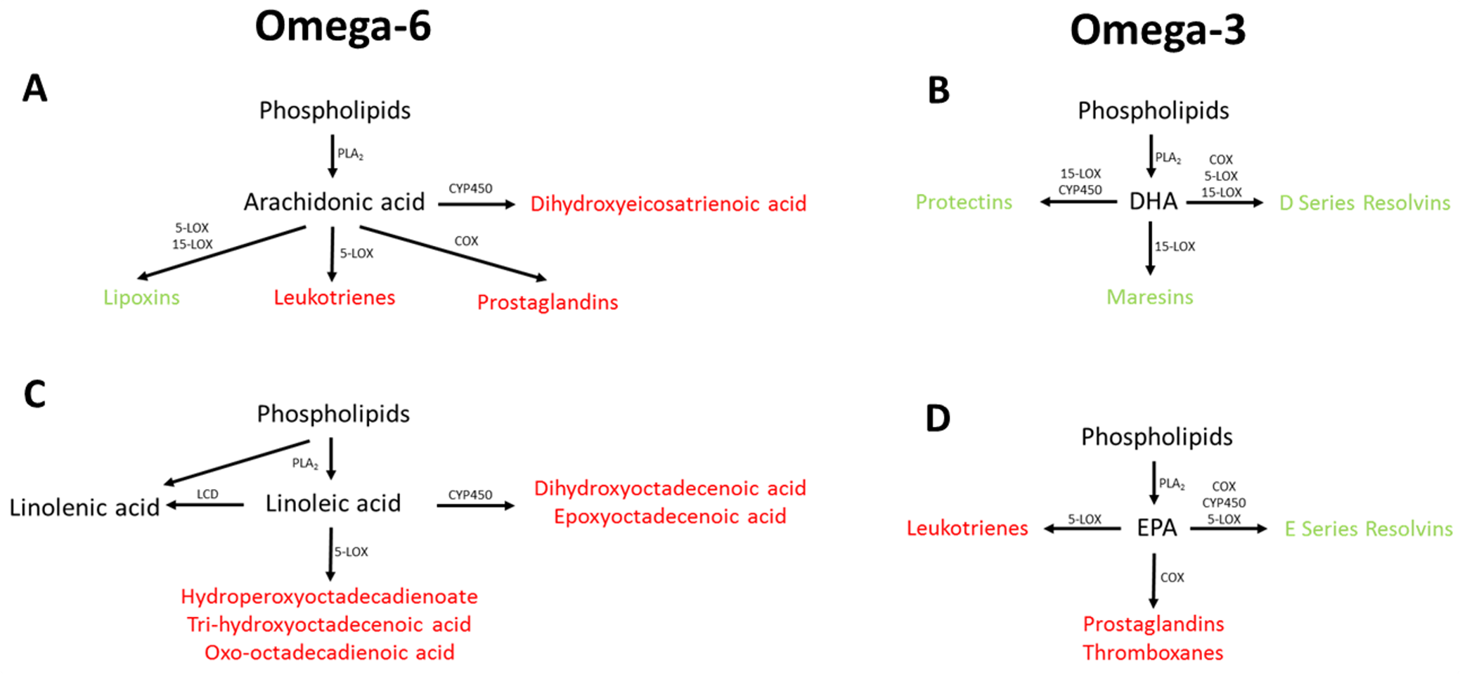 Overview of omega-3 and omega-6 UFA metabolism showing the potential association between the measured UFAs.