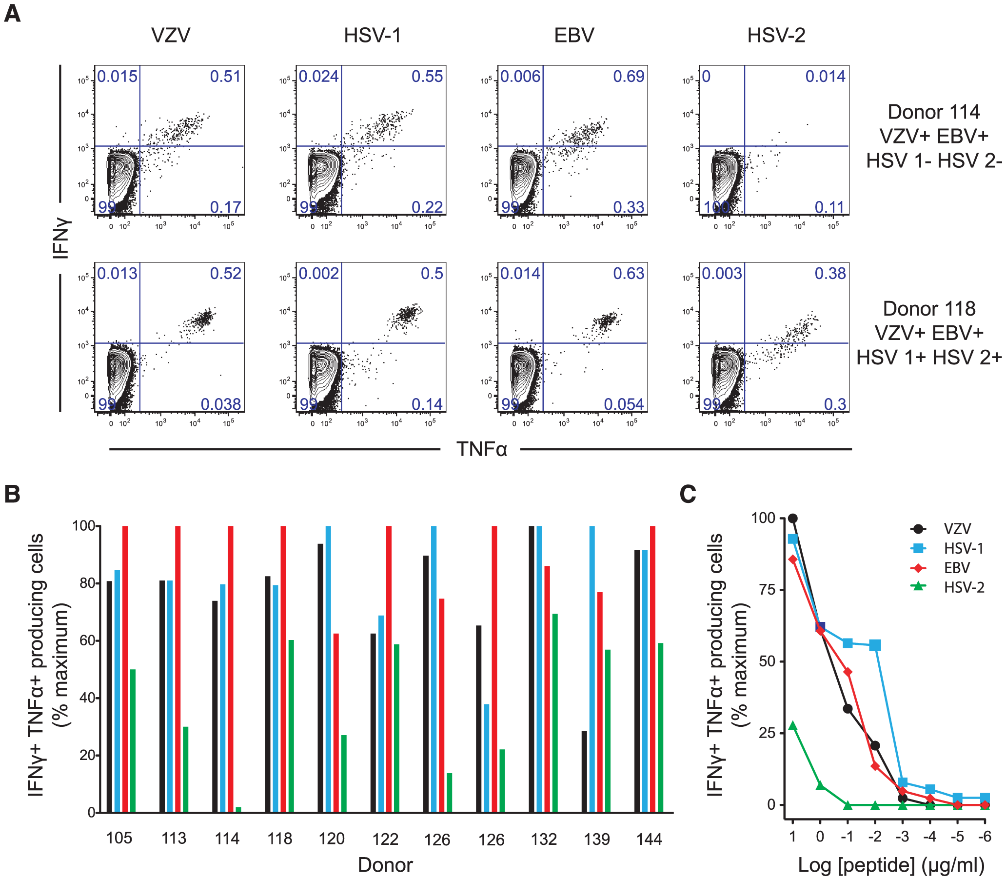 ILI-specific CD8 T cells are broadly reactive, recognizing homologous epitopes conserved between alpha- and gamma-herpesviruses.