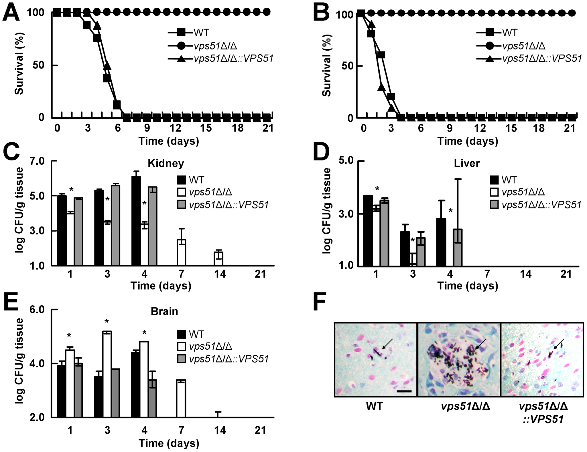 A <i>vps51</i>Δ/Δ mutant has attenuated overall virulence, but increased brain tropism during hematogenously disseminated candidiasis.