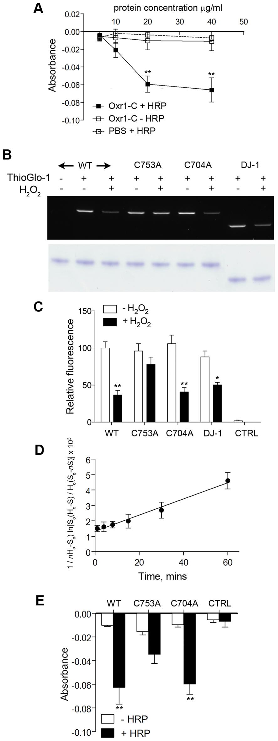 Oxr1 undergoes oxidation by H<sub>2</sub>O<sub>2</sub>.