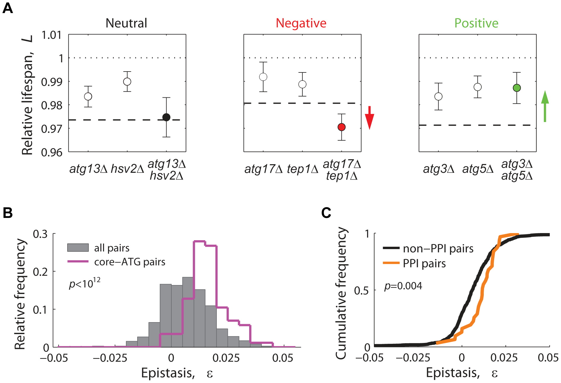 Lifespan-epistatic interactions recapitulate functional and physical associations.