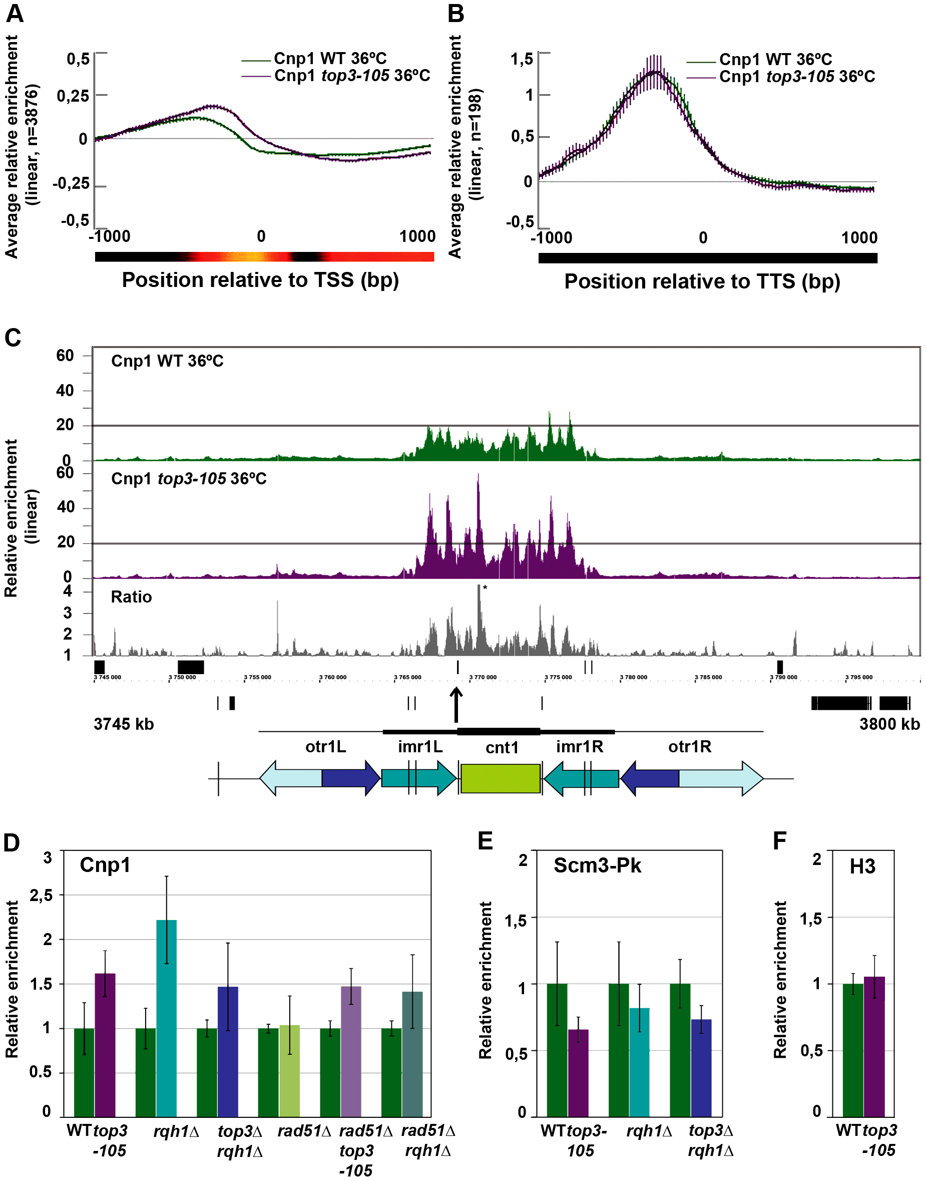 Top3 and Rqh1 affect CENP-A<sup>Cnp1</sup> enrichment at 5′IGRs and centromeres.