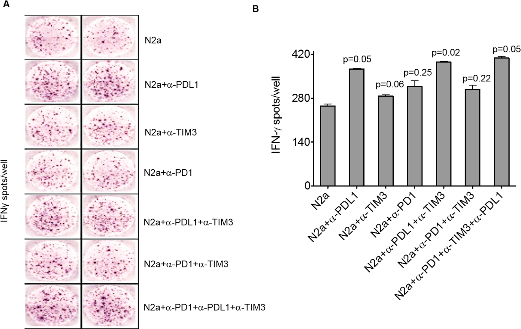 Programmed cell death-ligand 1 (PD-L1) blockade boosts interferon gamma (IFNγ) production of tumor-infiltrating lymphocytes (TILs) in vitro.