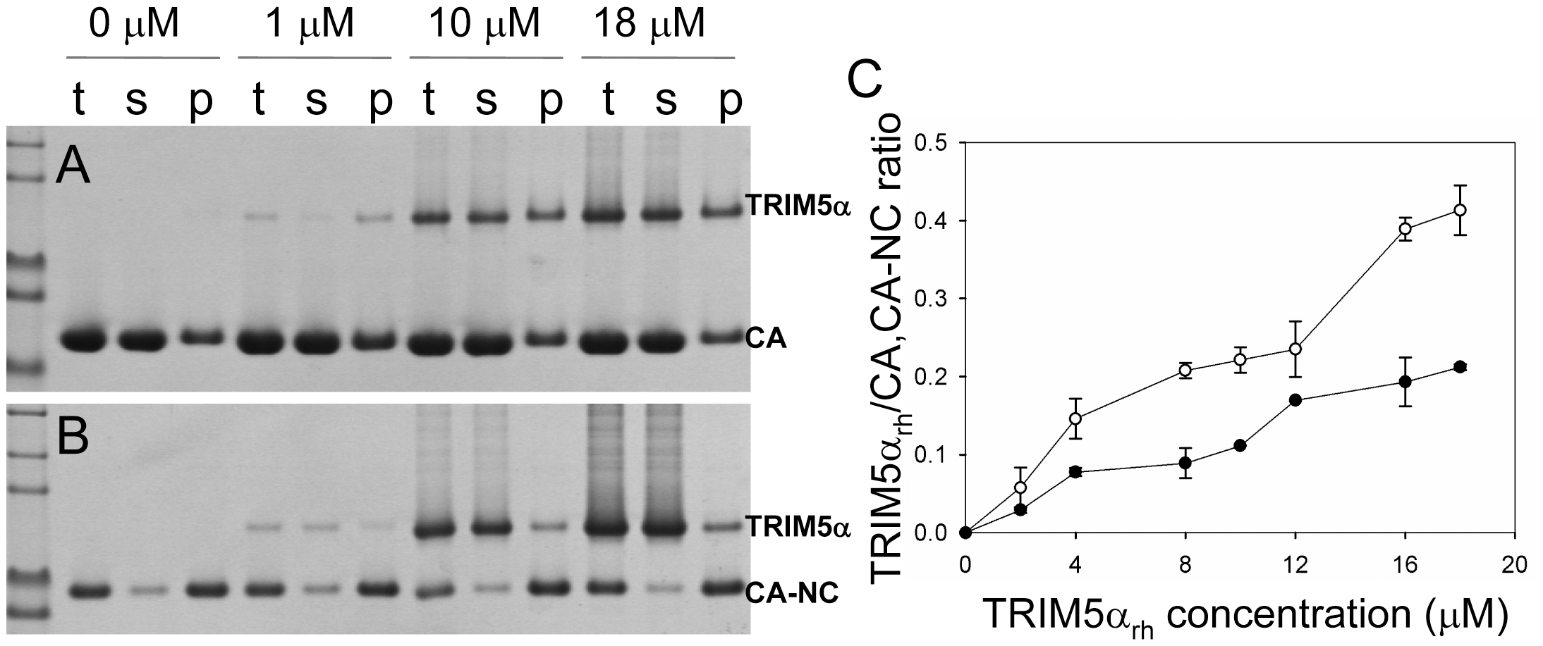 Analysis of TRIM5α<sub>rh</sub> CC-SPRY binding to the assembly of wild-type CA and CA-NC tubes.